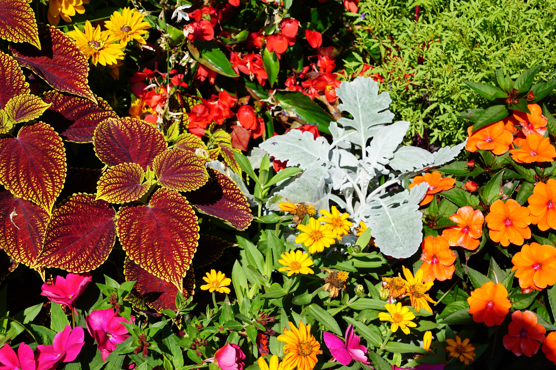 Все однолетние цветы в саду в картинках