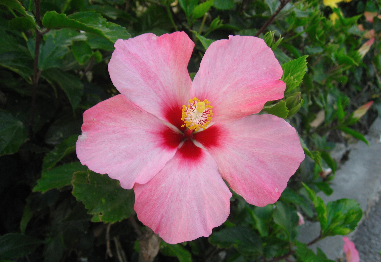 Free Images Leaf Flower Petal Green Red Botany Pink Japan
