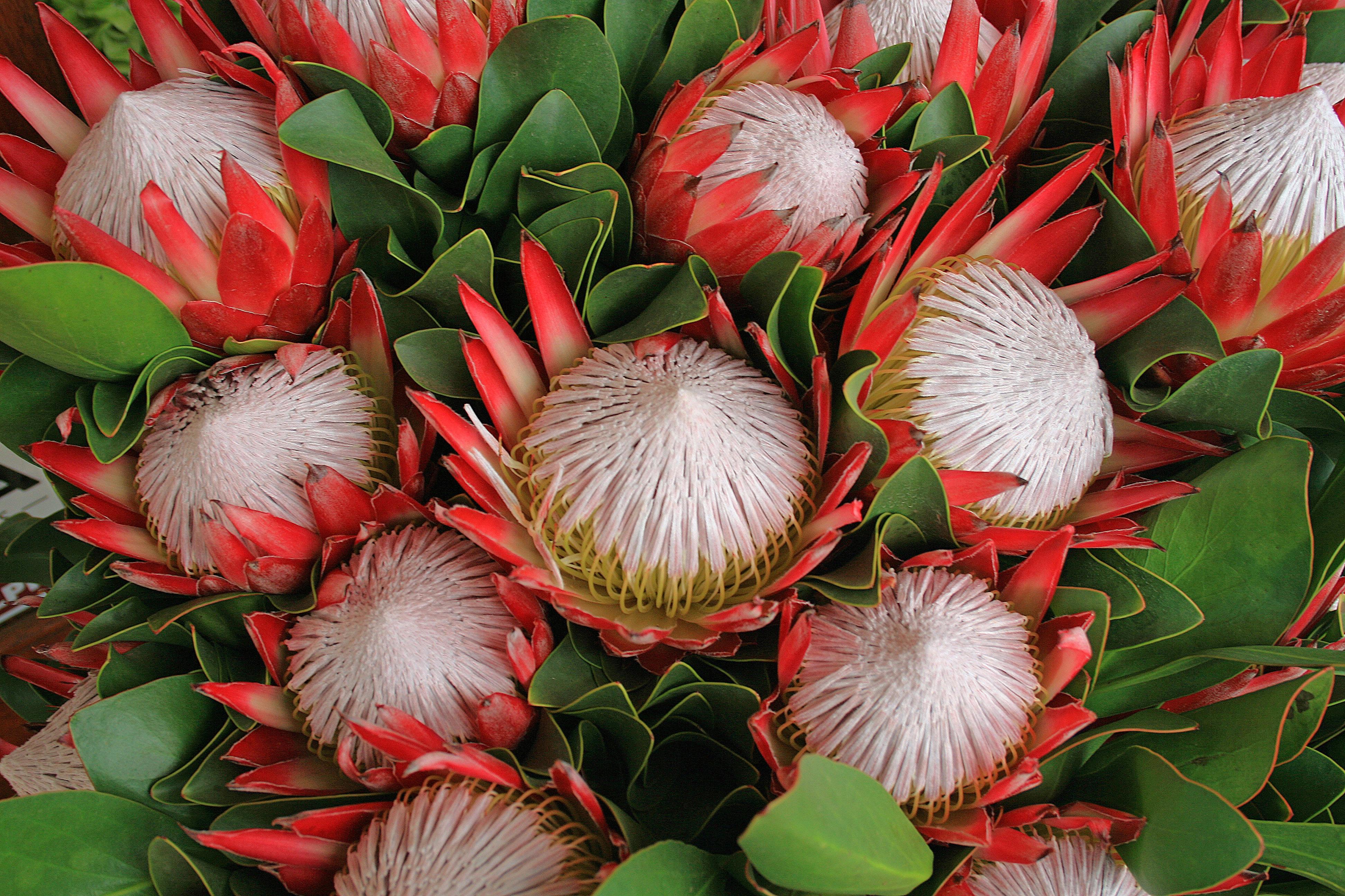 выпьем доброту экзотические цветы для букетов названия и фото картине изображено