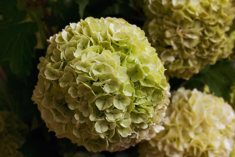 Images Gratuites Feuille Fleur Petale Printemps Vert
