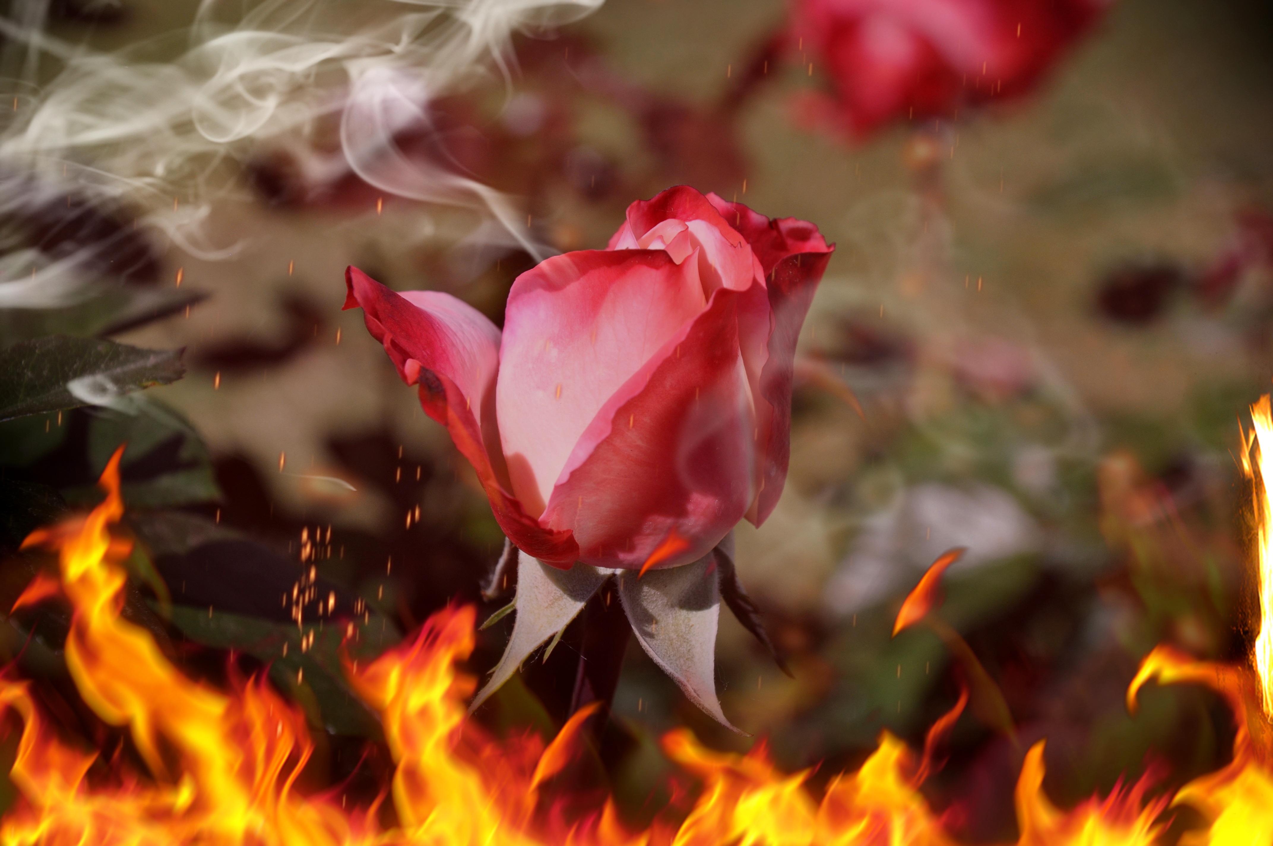 картинки лепесток огня для вас