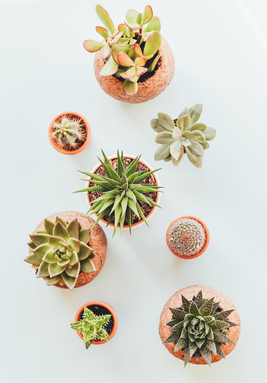 Free Images : leaf, flower, pot, pattern, food, produce, cactu ...
