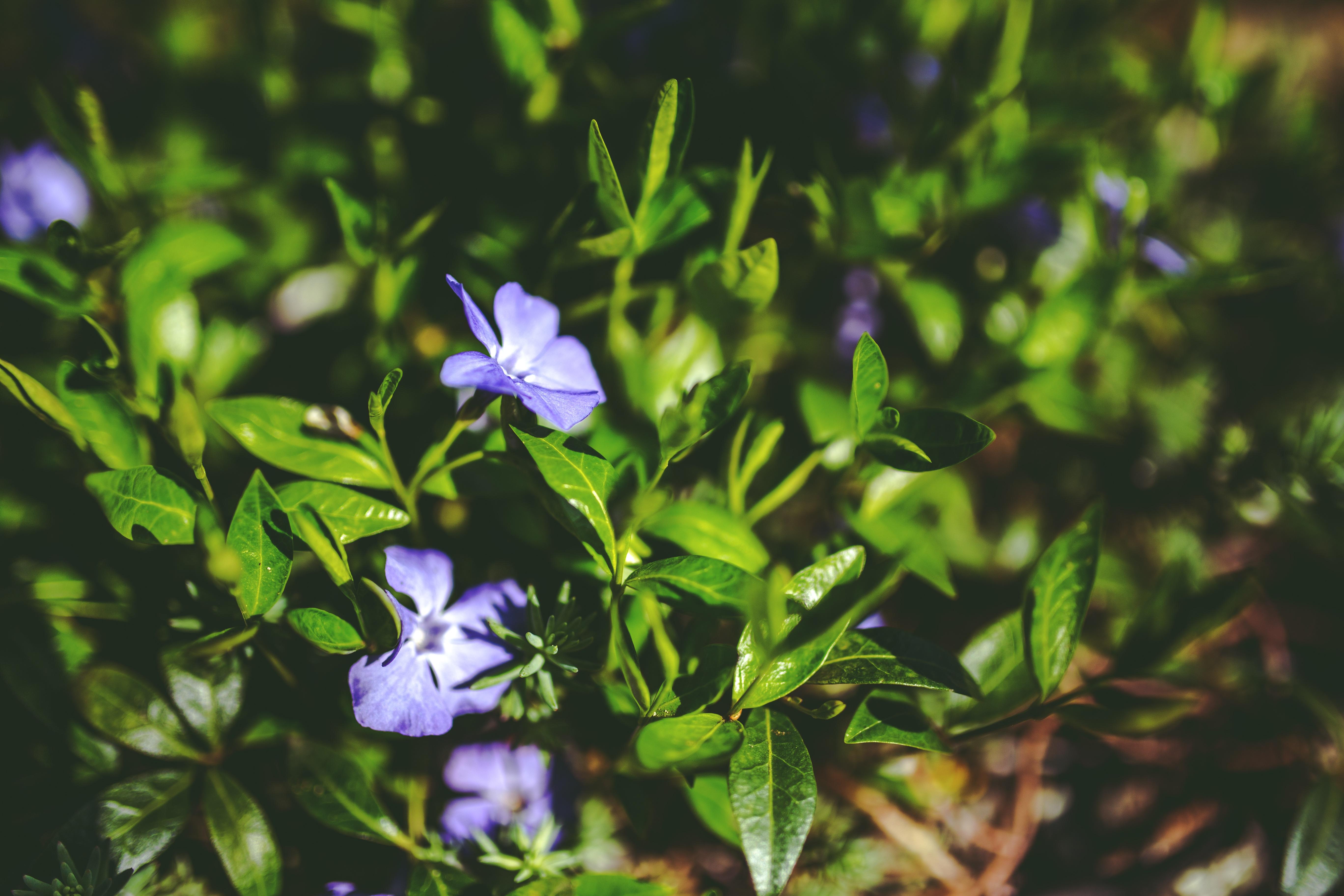 free images : leaf, flower, purple, green, botany, garden, decor