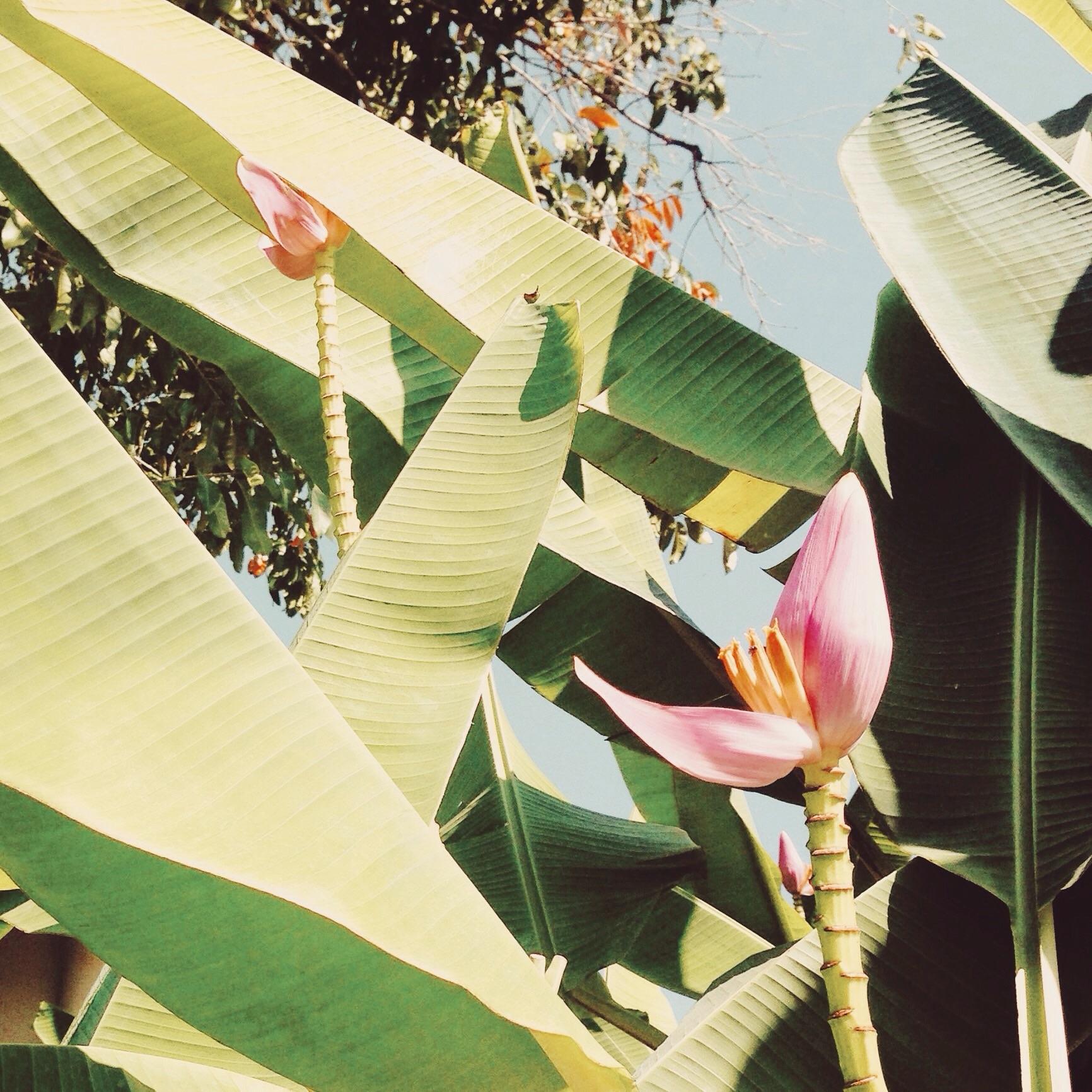 növény levél növényen virág tavaszi zöld szín növénytan növényvilág művészet c4c7af2874