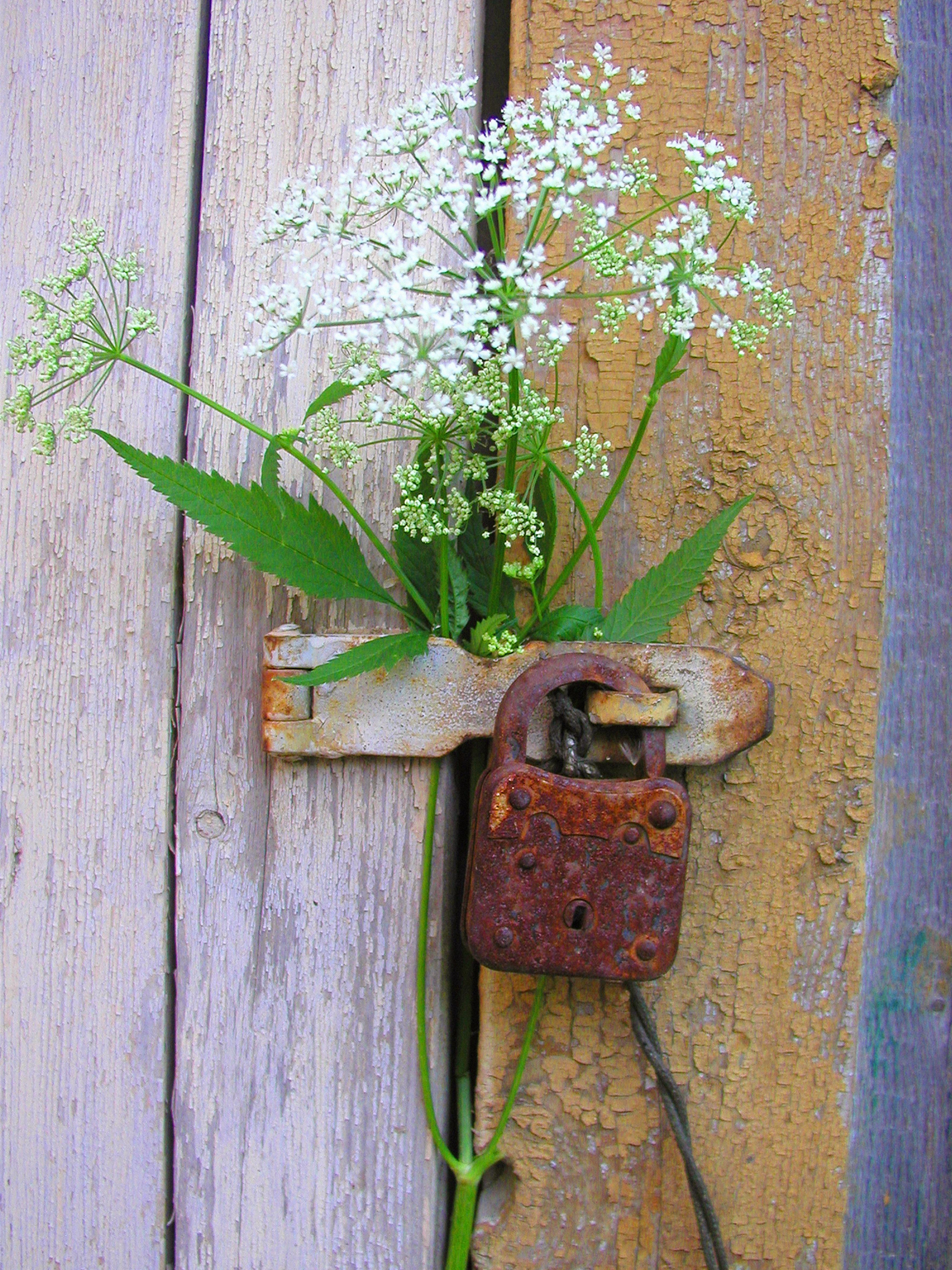 free images : plant, leaf, wall, green, castle, botany, flora