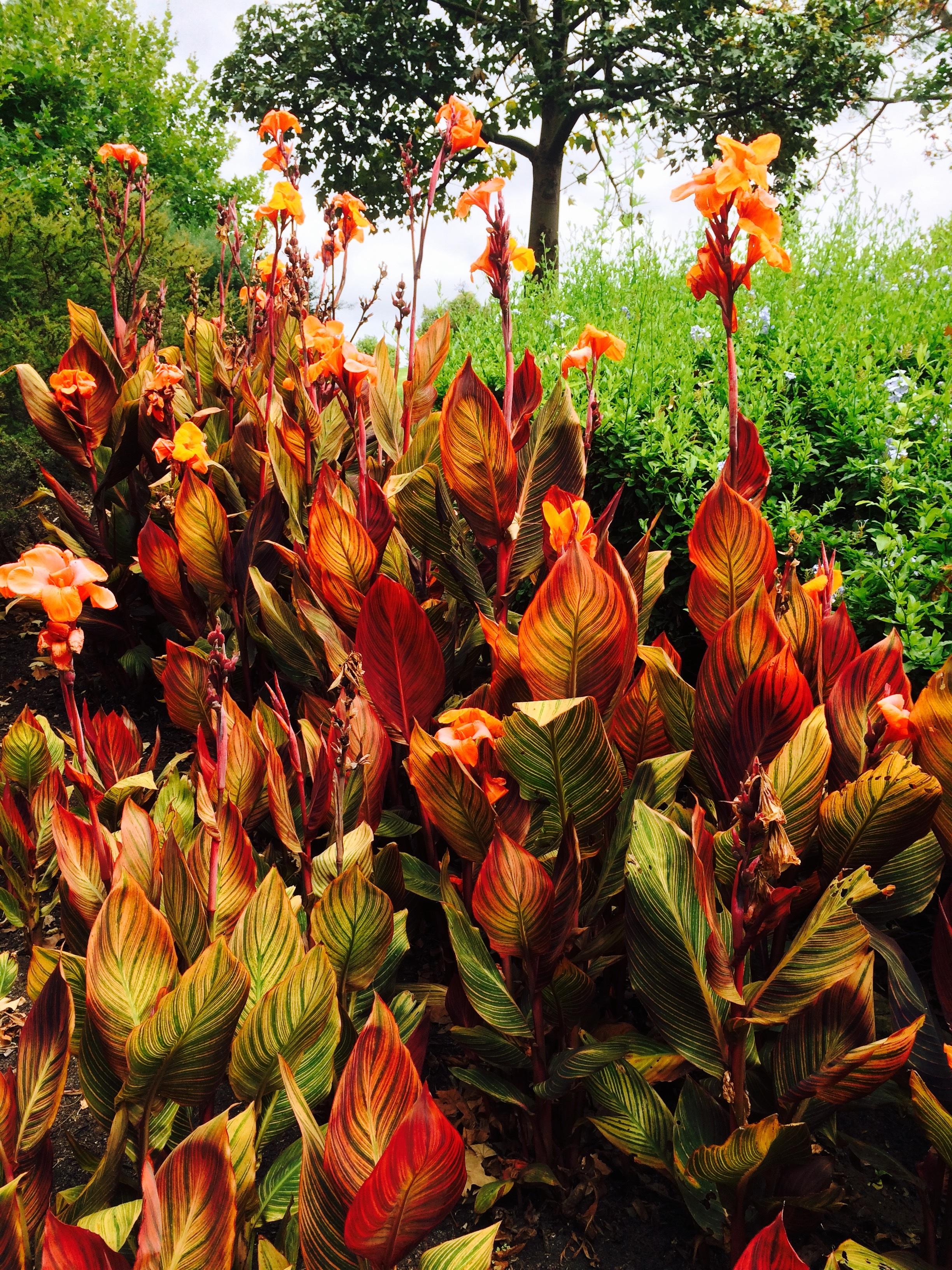 Free Images : leaf, flower, wild, autumn, botany, garden, flora ...