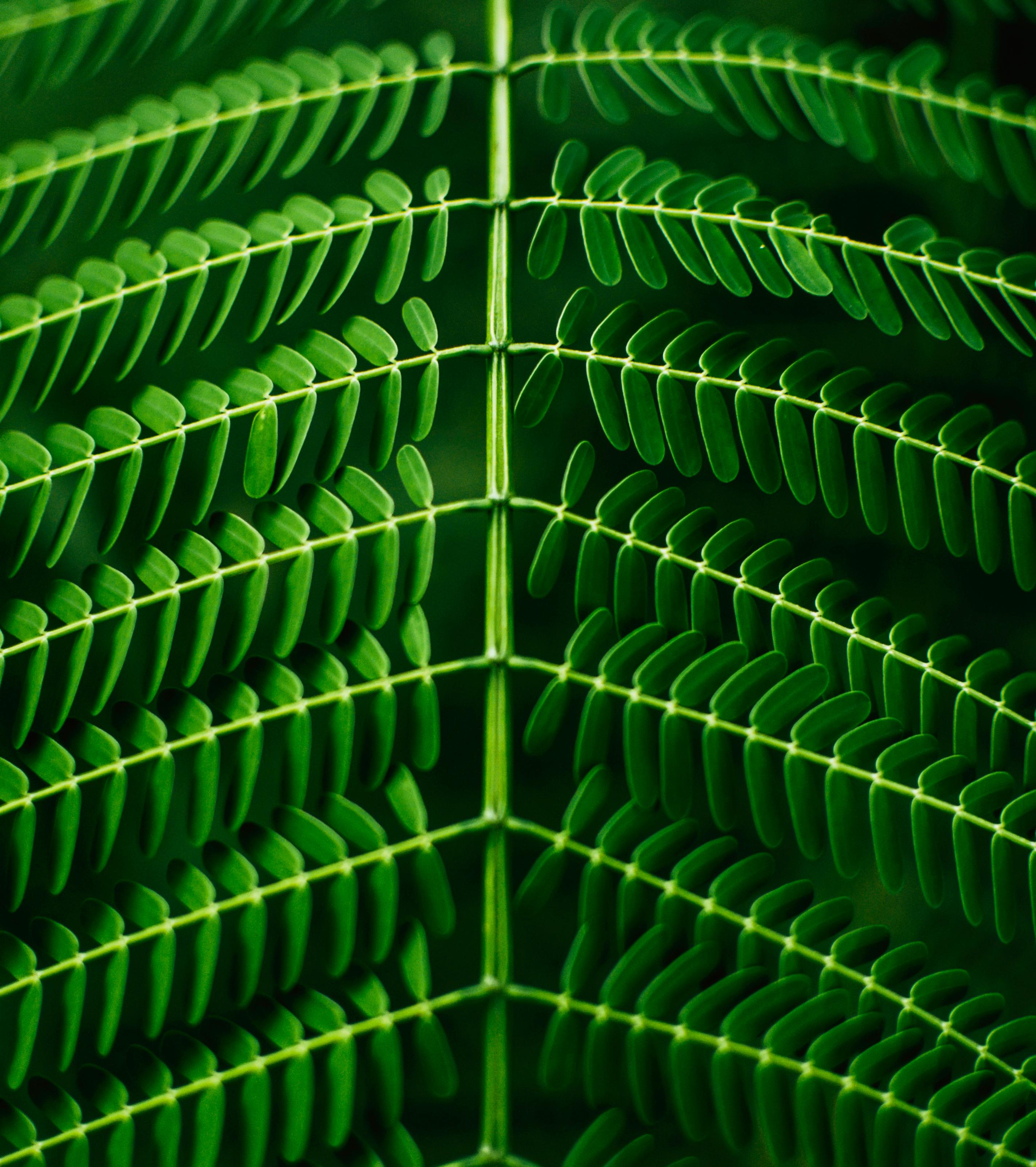 Fotos gratis : planta, hoja, patrón, línea, verde, circulo, fuente ...