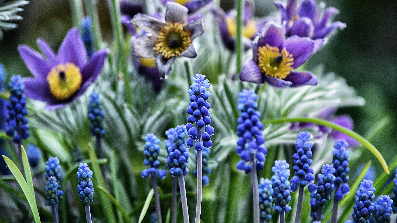 hình ảnh : thực vật, đồng cỏ, Thực vật học, Hệ thực vật, Hoa ...