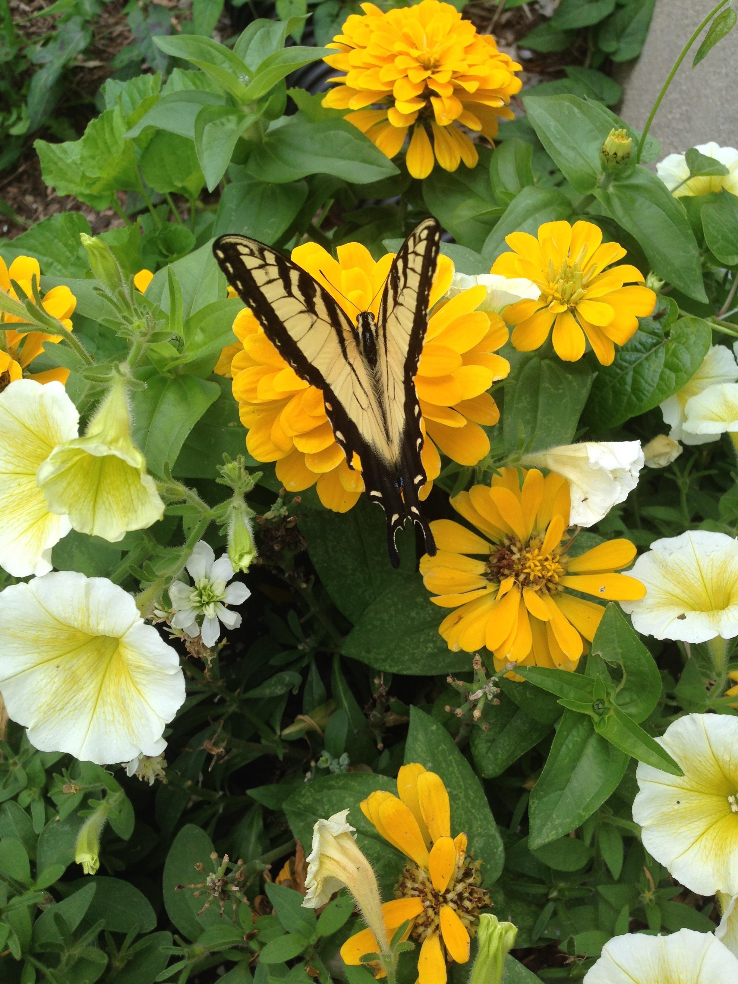 Fiori Gialli Estivi.Immagini Belle Prato Fiore Insetto Botanica Farfalla Giallo