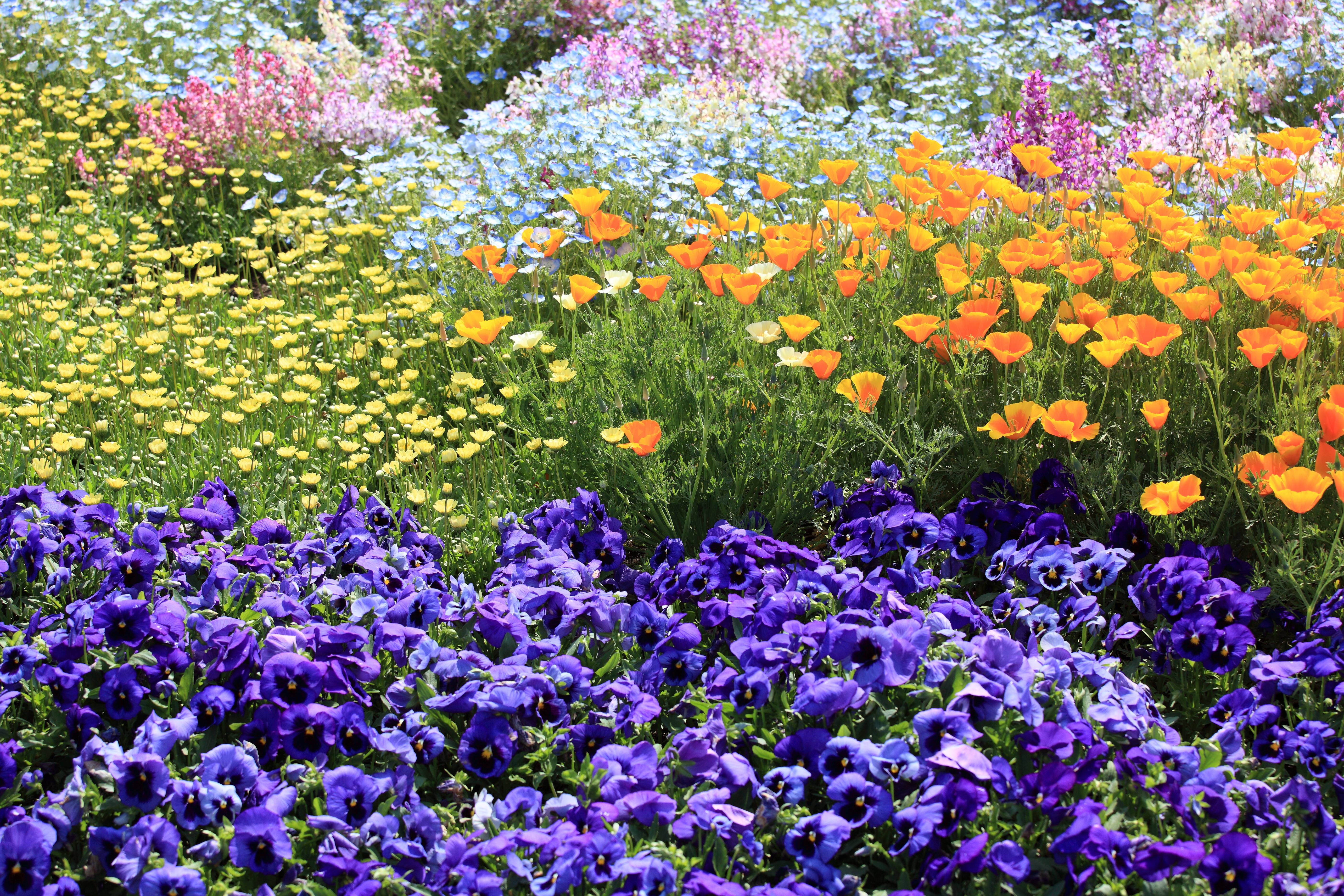 Free Images Meadow Flower Pattern High Garden Flora