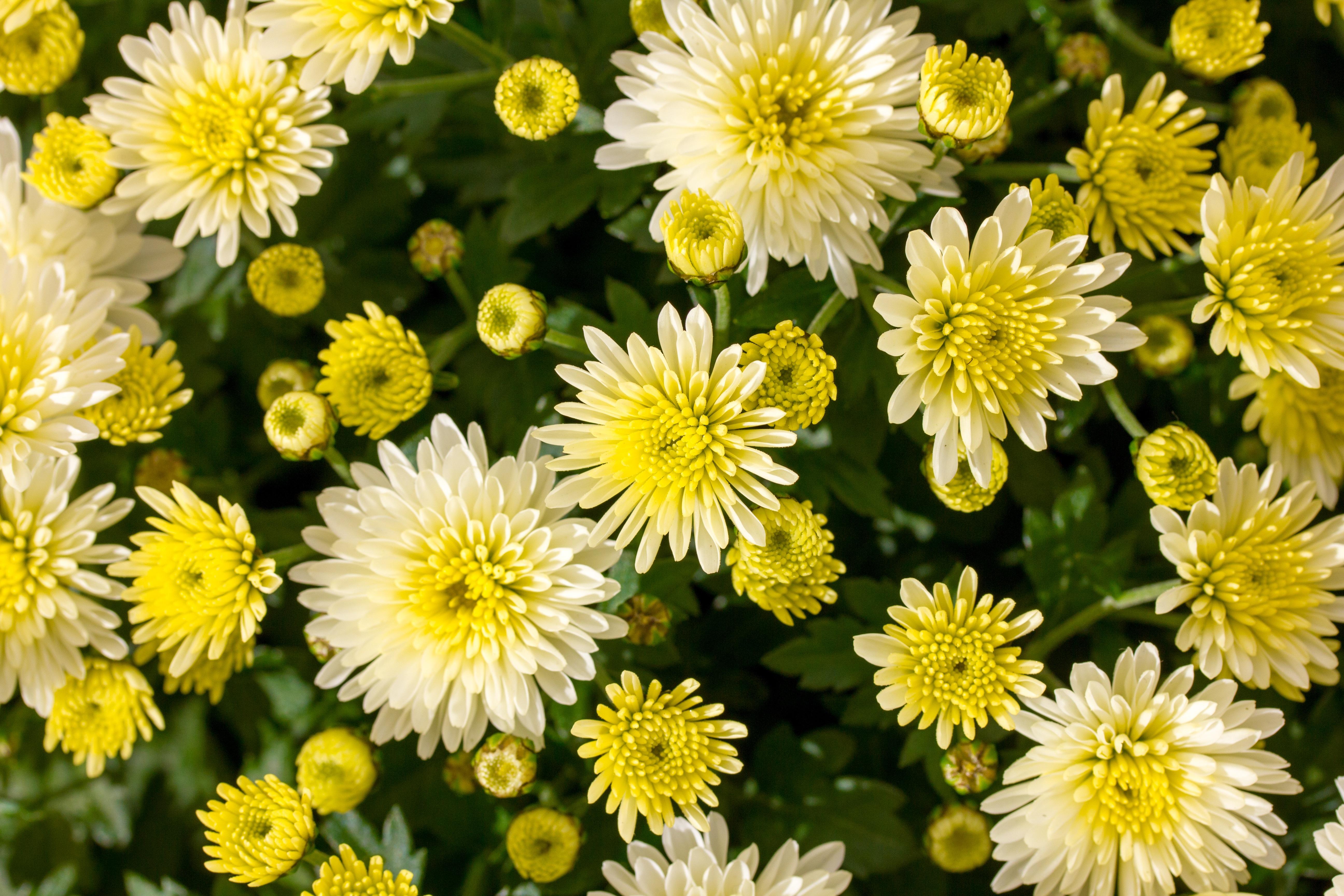 Free Images Meadow Petal Balcony Green Herb Autumn Garden