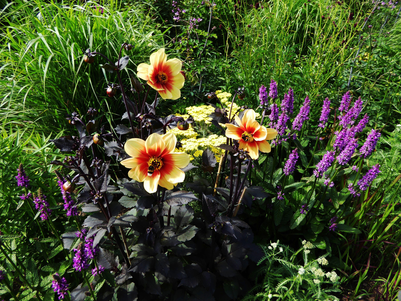 Free Images Meadow Purple Orange Spring Botany Yellow Flora