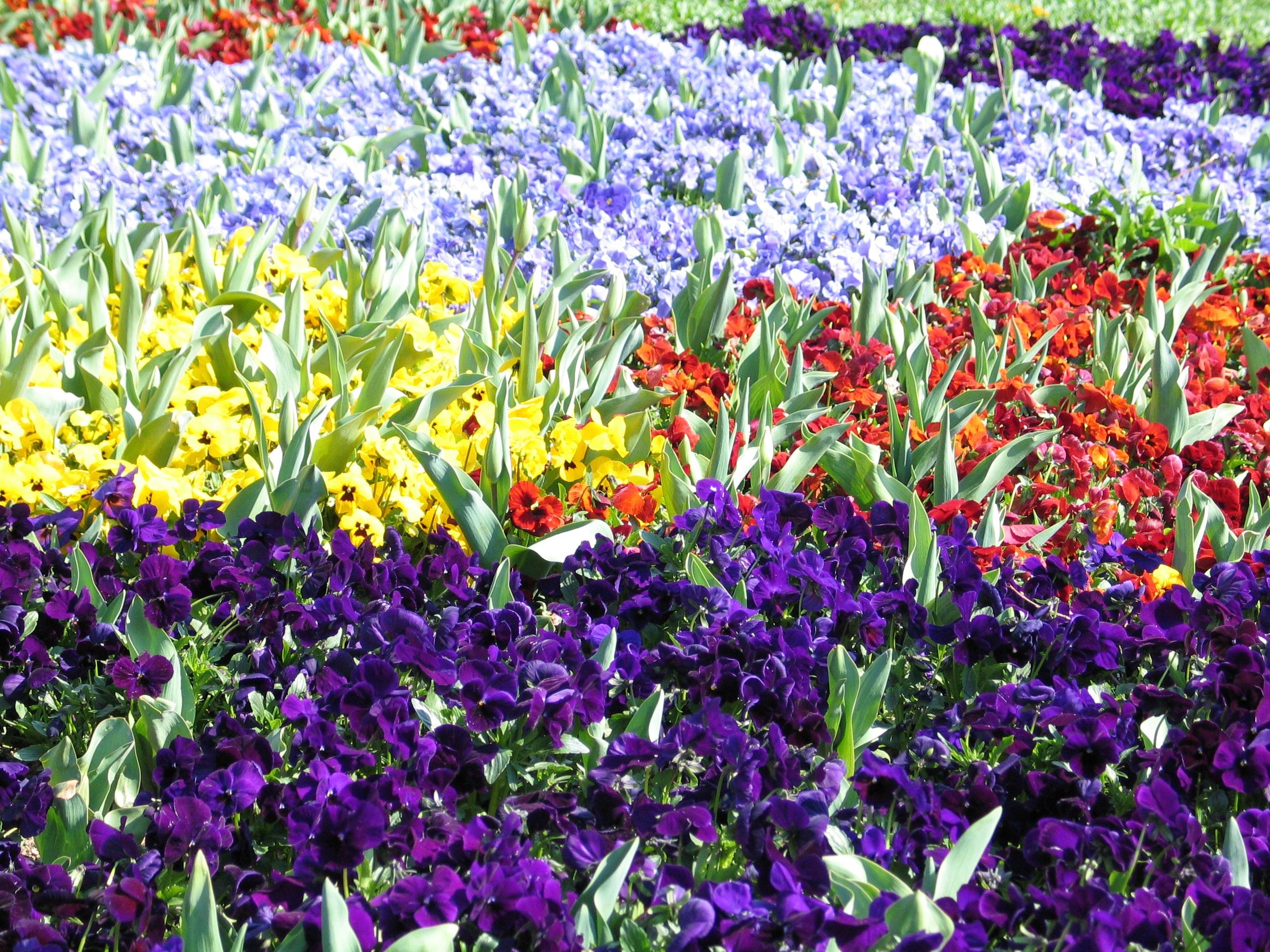 Blumenwiese Englisch kostenlose foto wiese blume rot bunt flora wildblume blumen