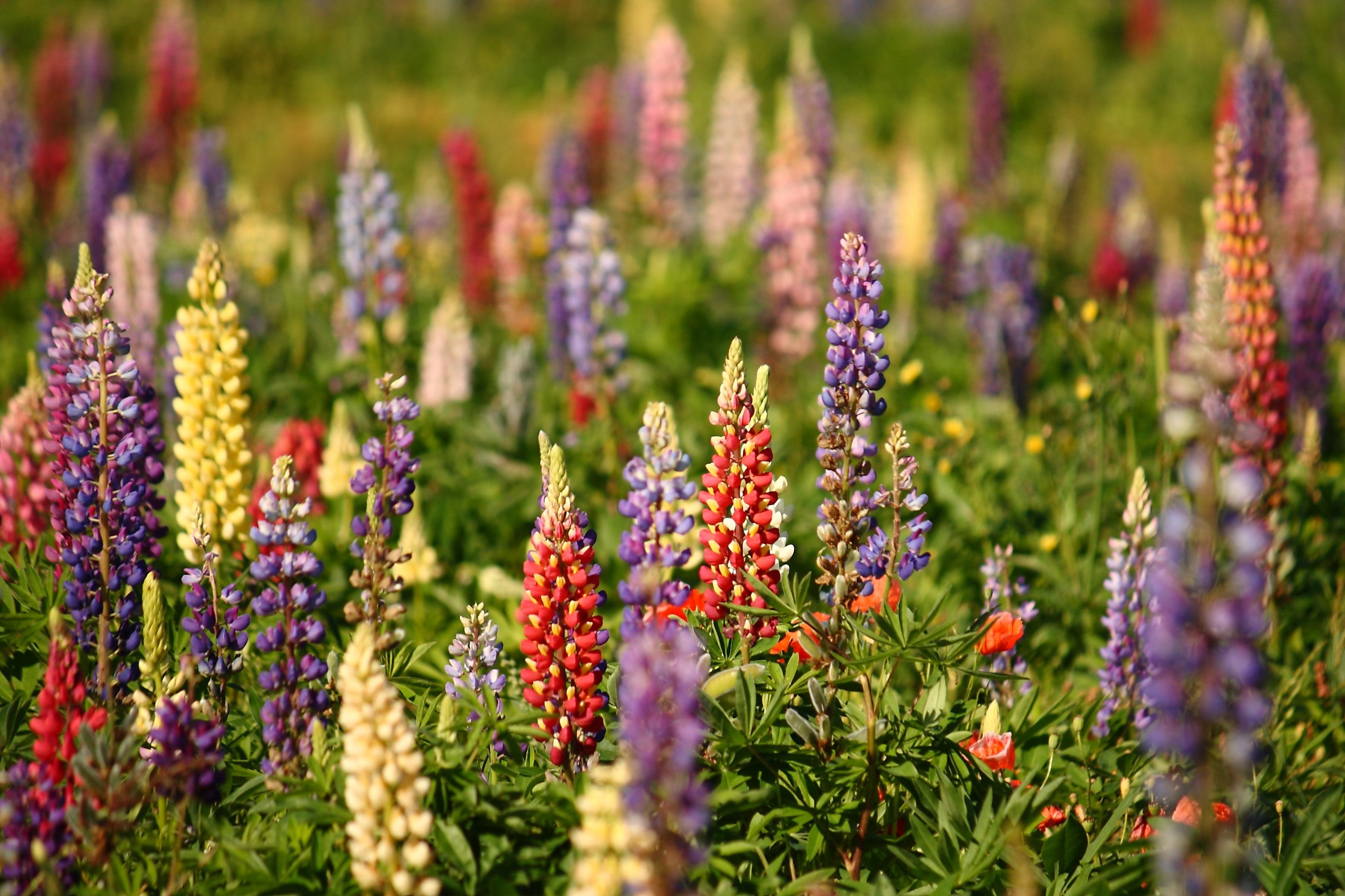 Images Gratuites Prairie Fleur Ete Naturel Botanique Flore