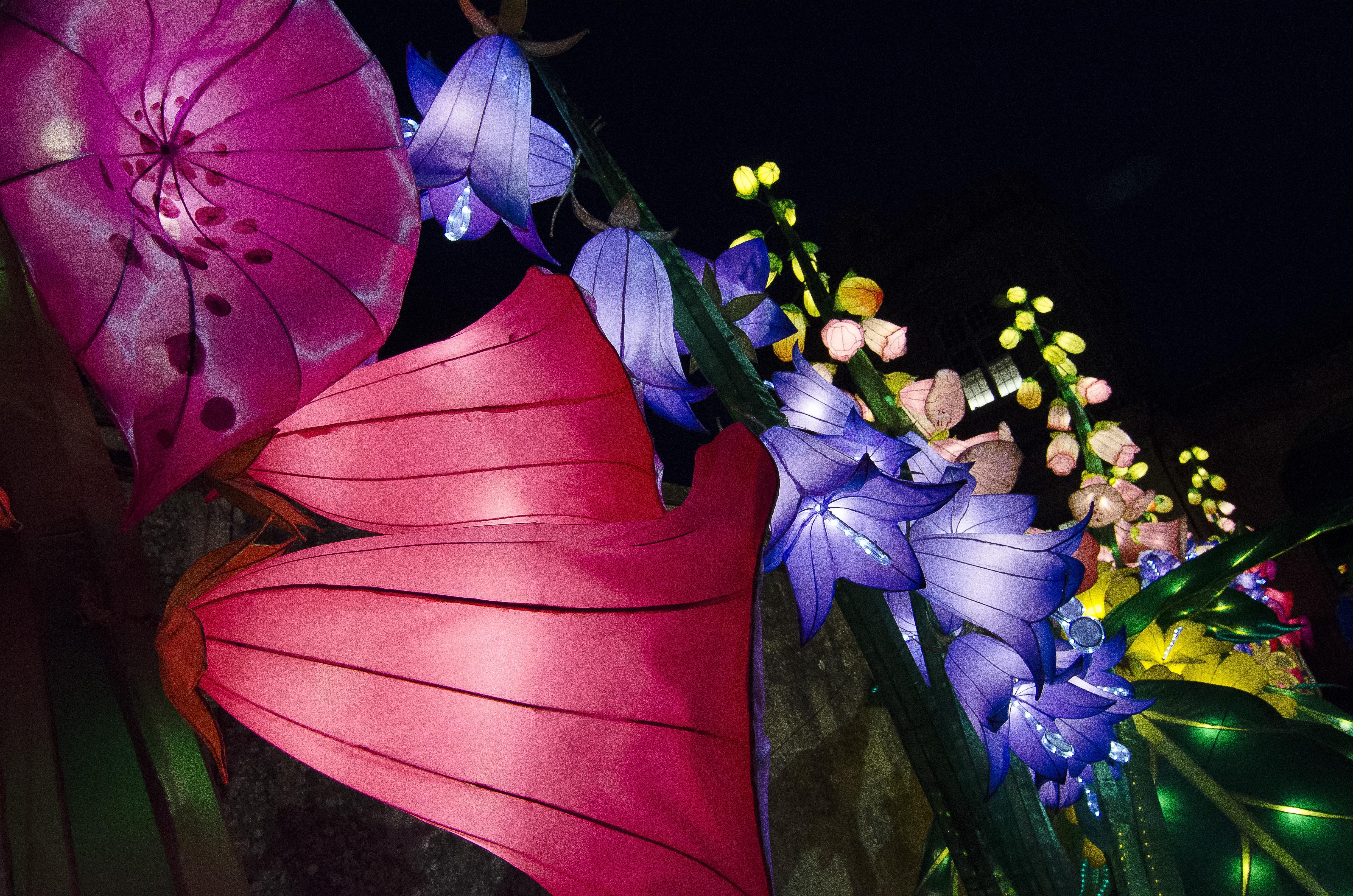 Gambar Menanam Malam Ungu Daun Bunga Flora Diterangi Seni