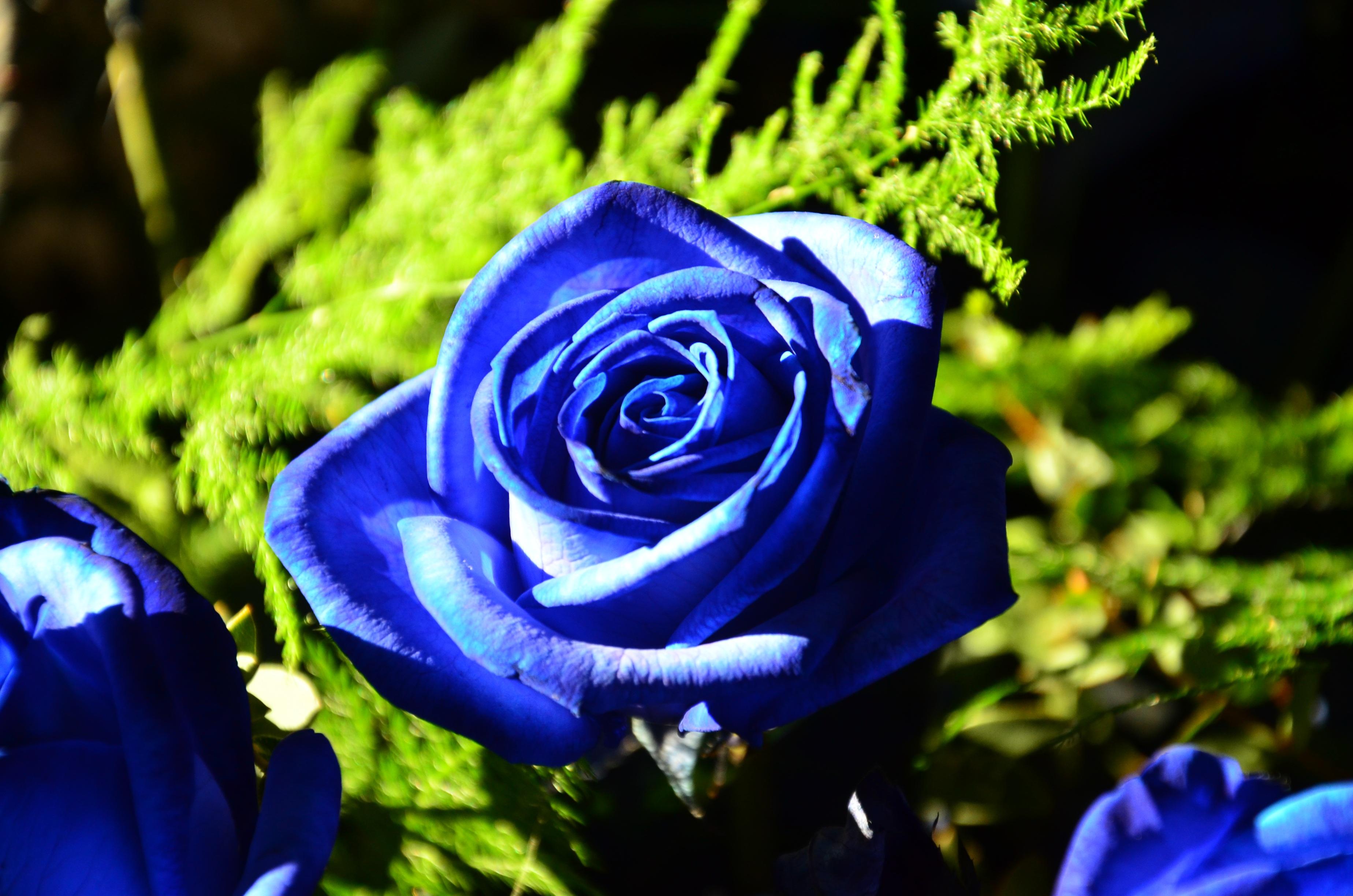 Фото картинки синего цвета