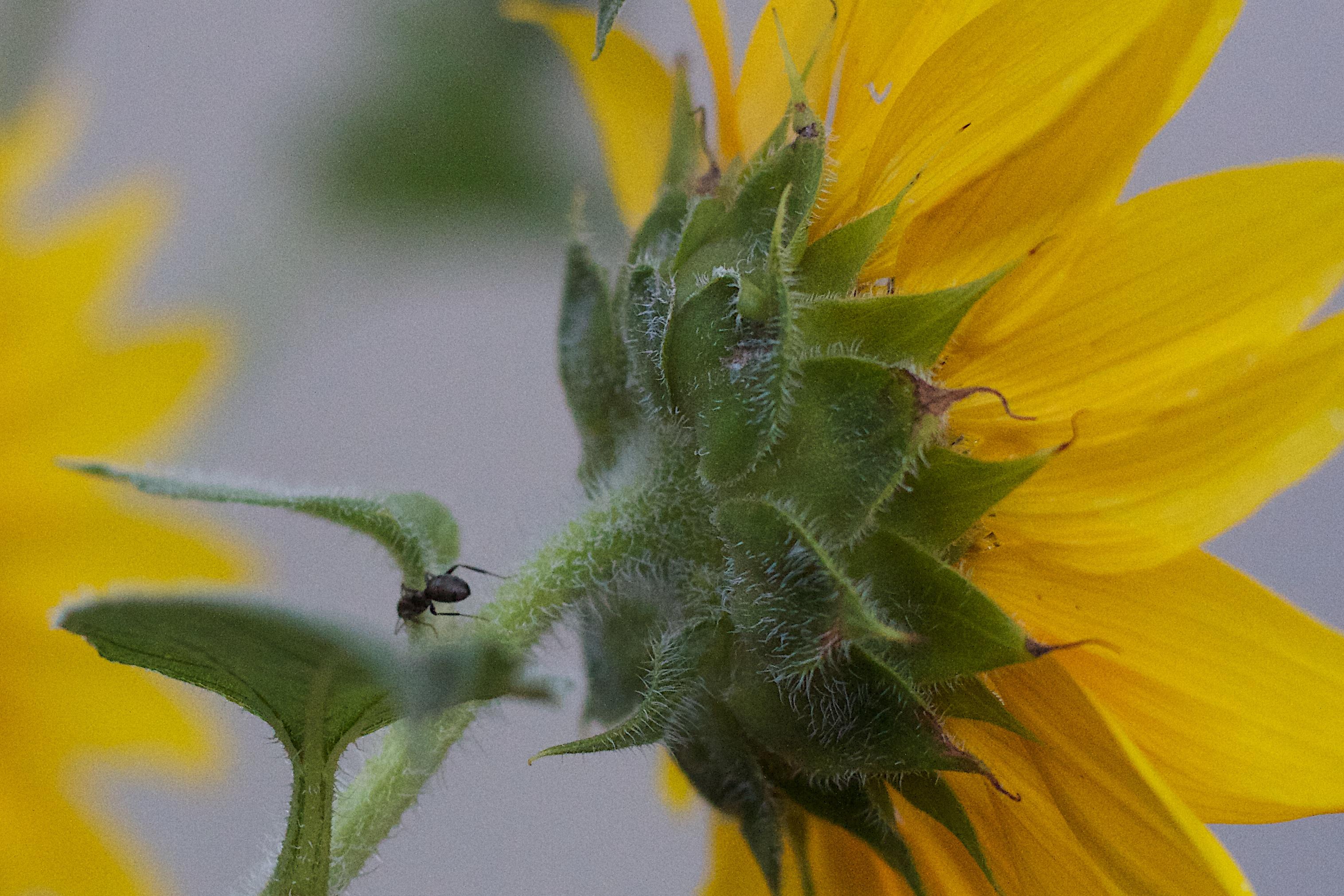 Hình ảnh Thực Vật Nhiếp ảnh Cánh Hoa Màu Xanh Lá Thực