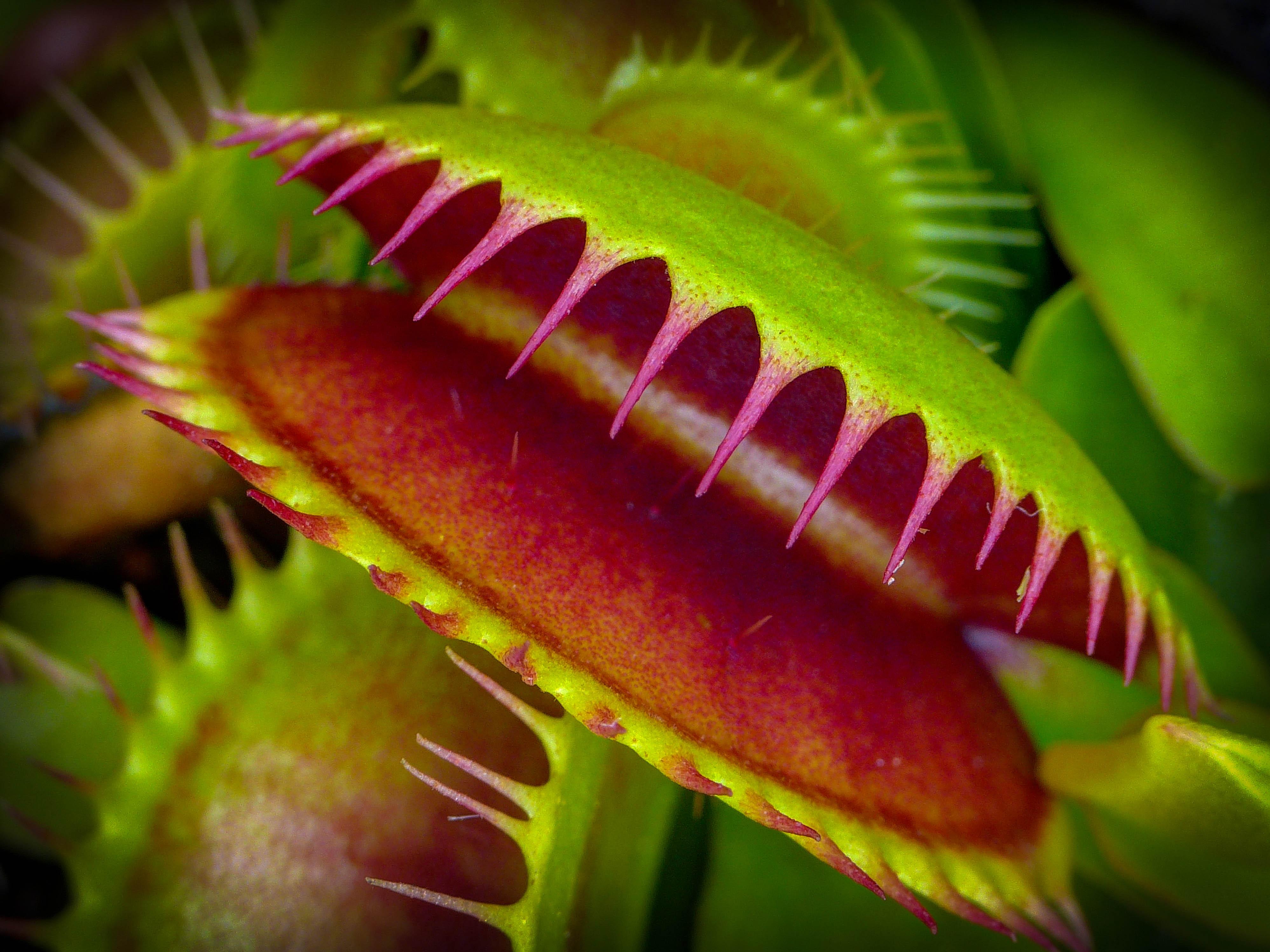 plante carnivore acheter