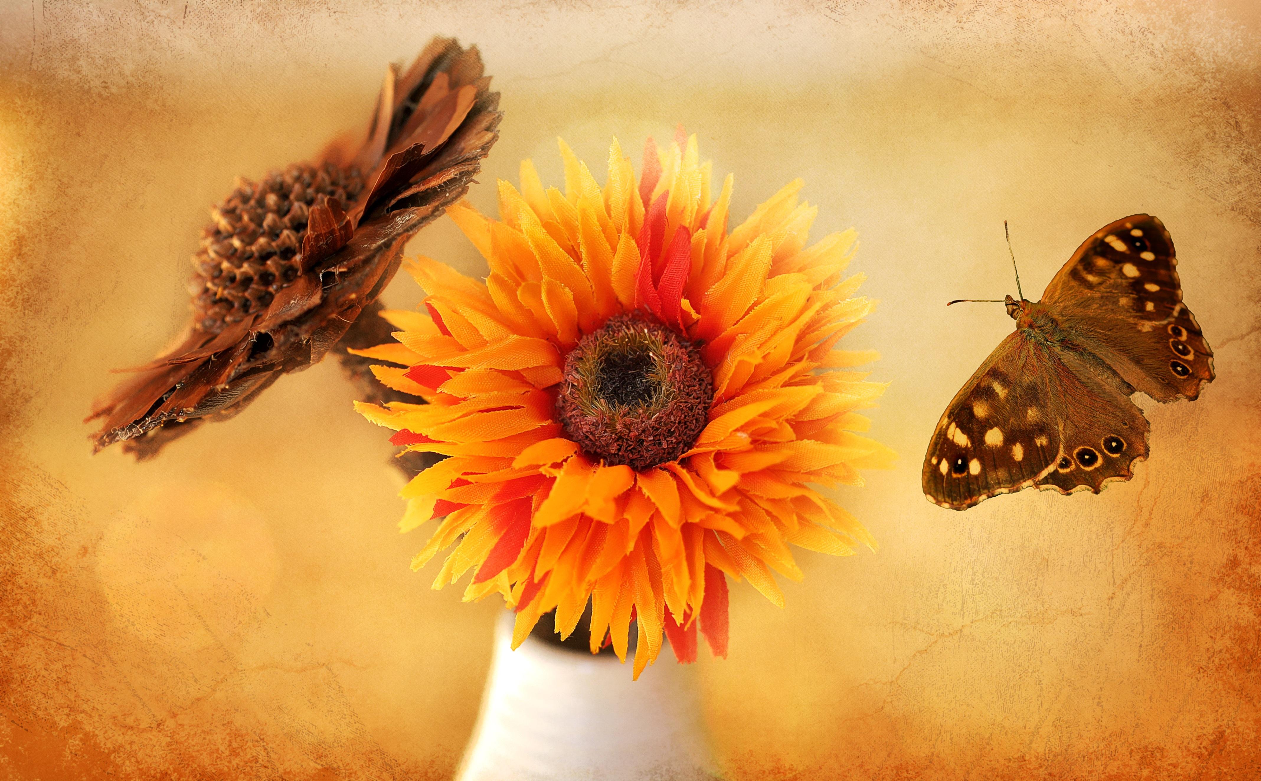 Free Images : leaf, flower, petal, decoration, orange, insect ...