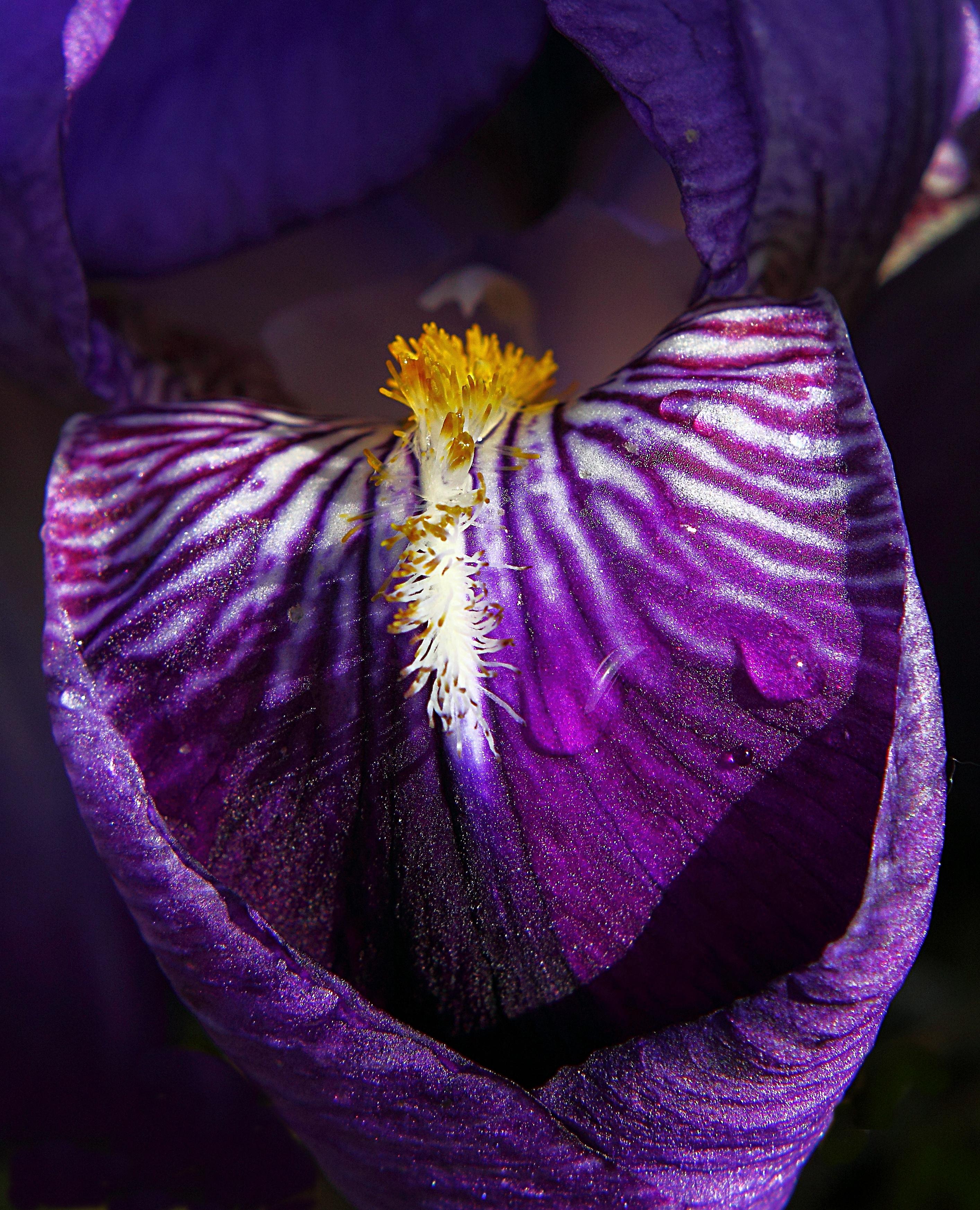 Покажи картинки пурпурный