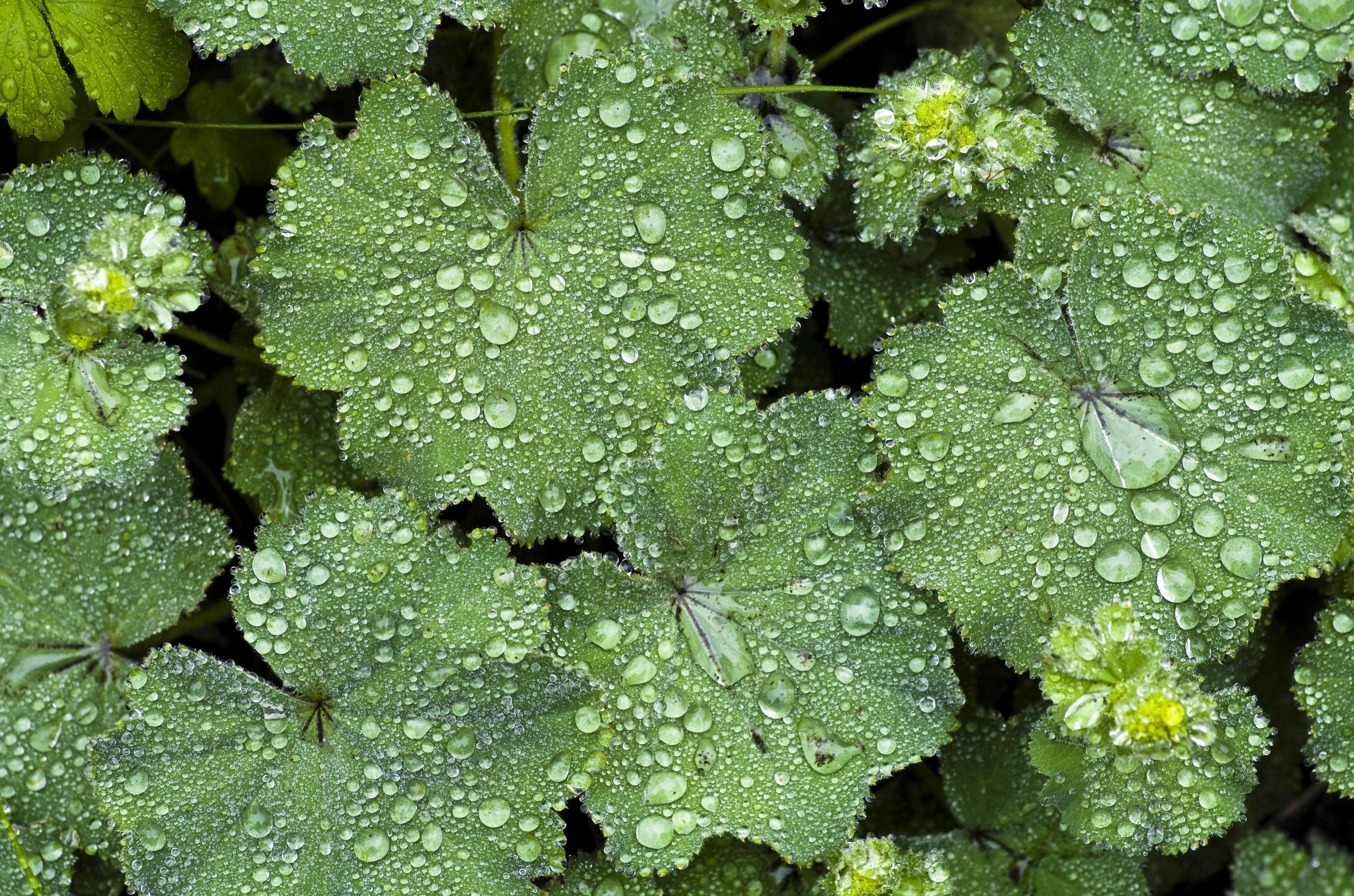 free images rain leaf flower food spring green. Black Bedroom Furniture Sets. Home Design Ideas