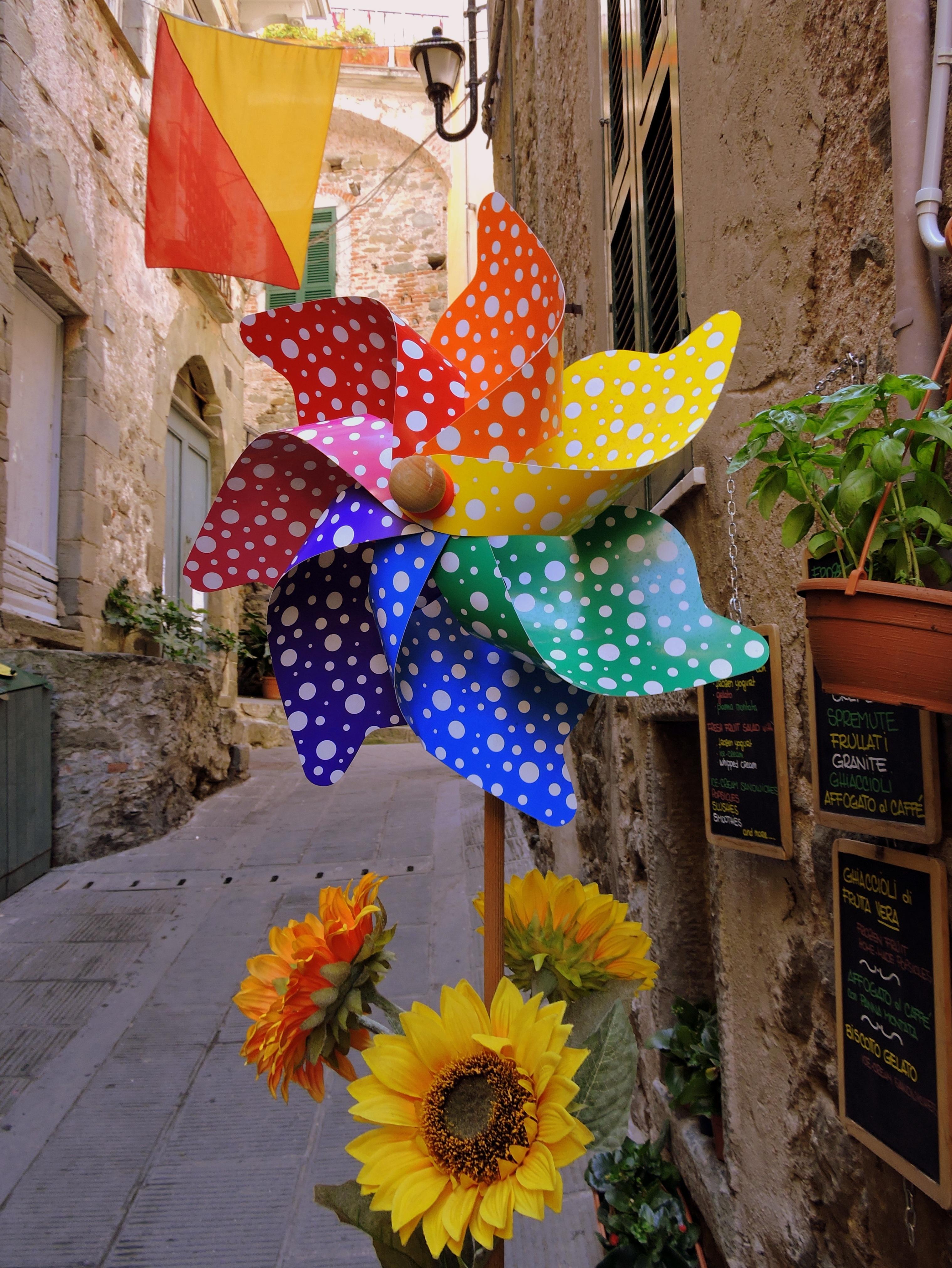 Kostenlose foto : Pflanze, Straße, Blume, Frühling, Farbe, Gelb ...
