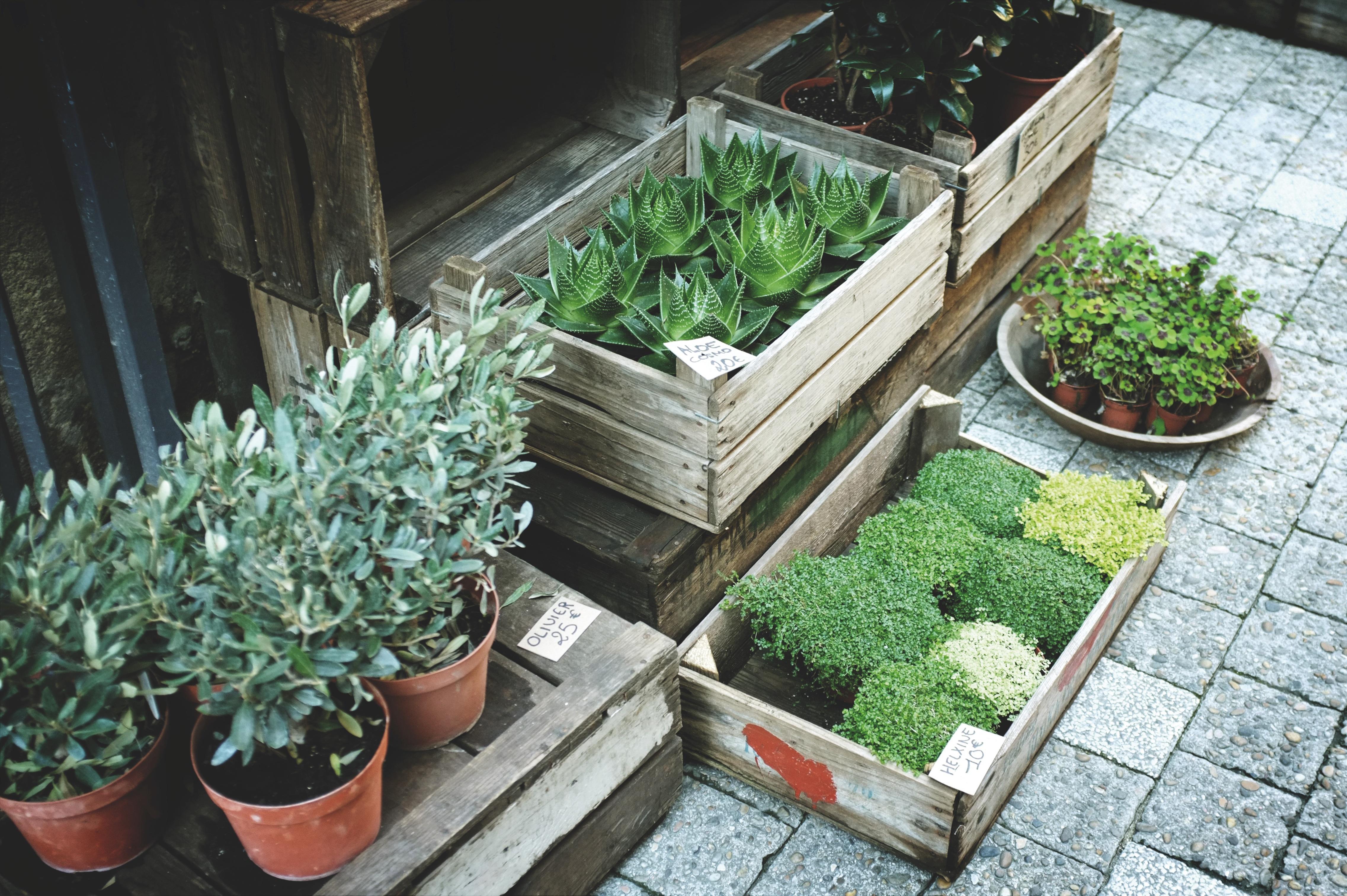 Free Images : sidewalk, flower, pot, herb, produce ...