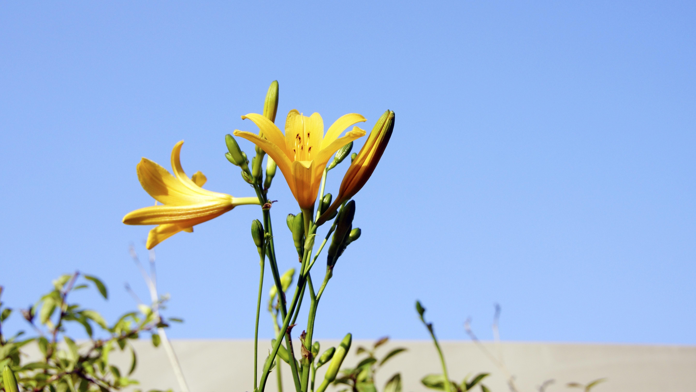 Free Images Sky Field Meadow Prairie Flower Petal Yellow