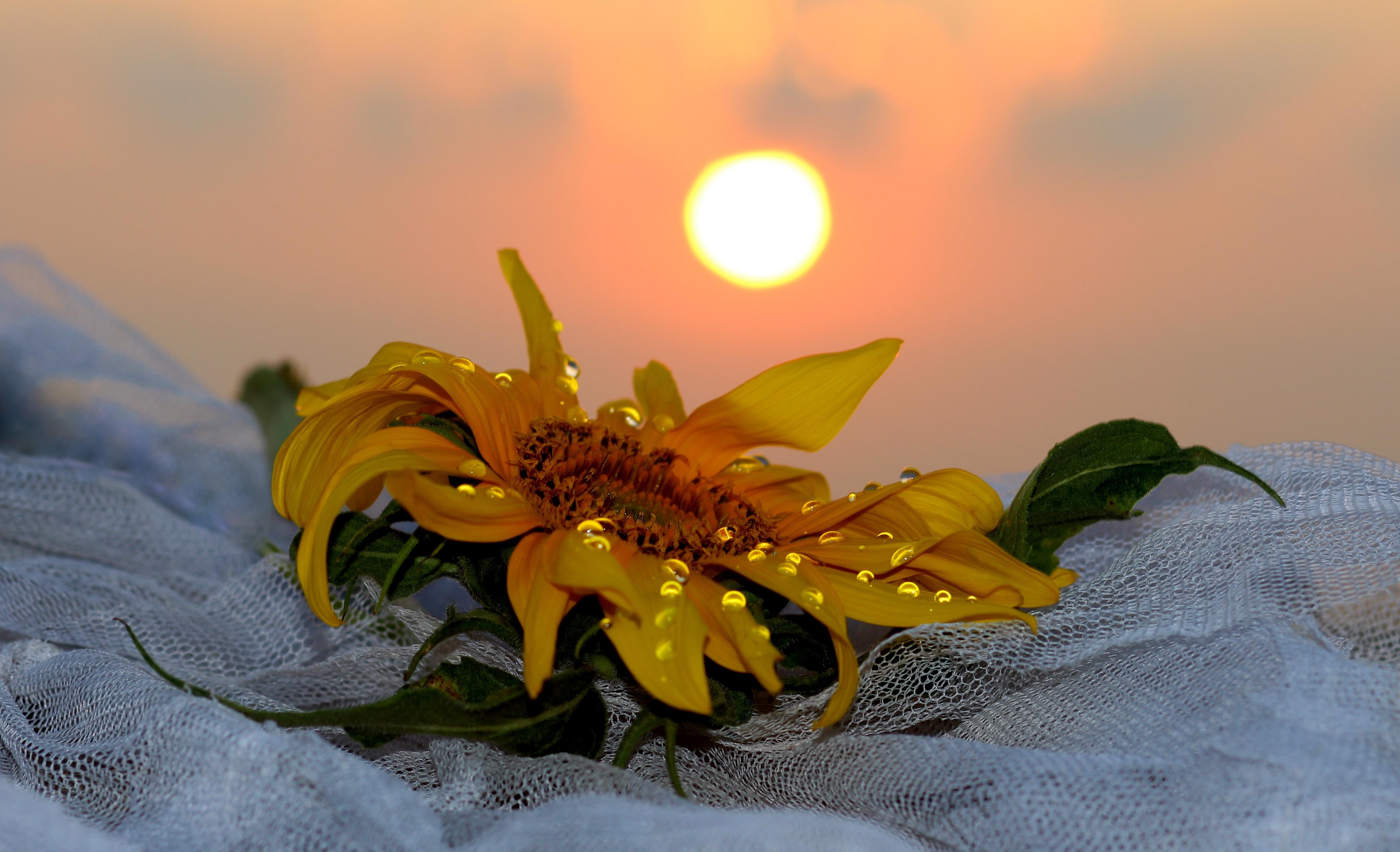 возможность картинки солнечного утра с цветами русский народ