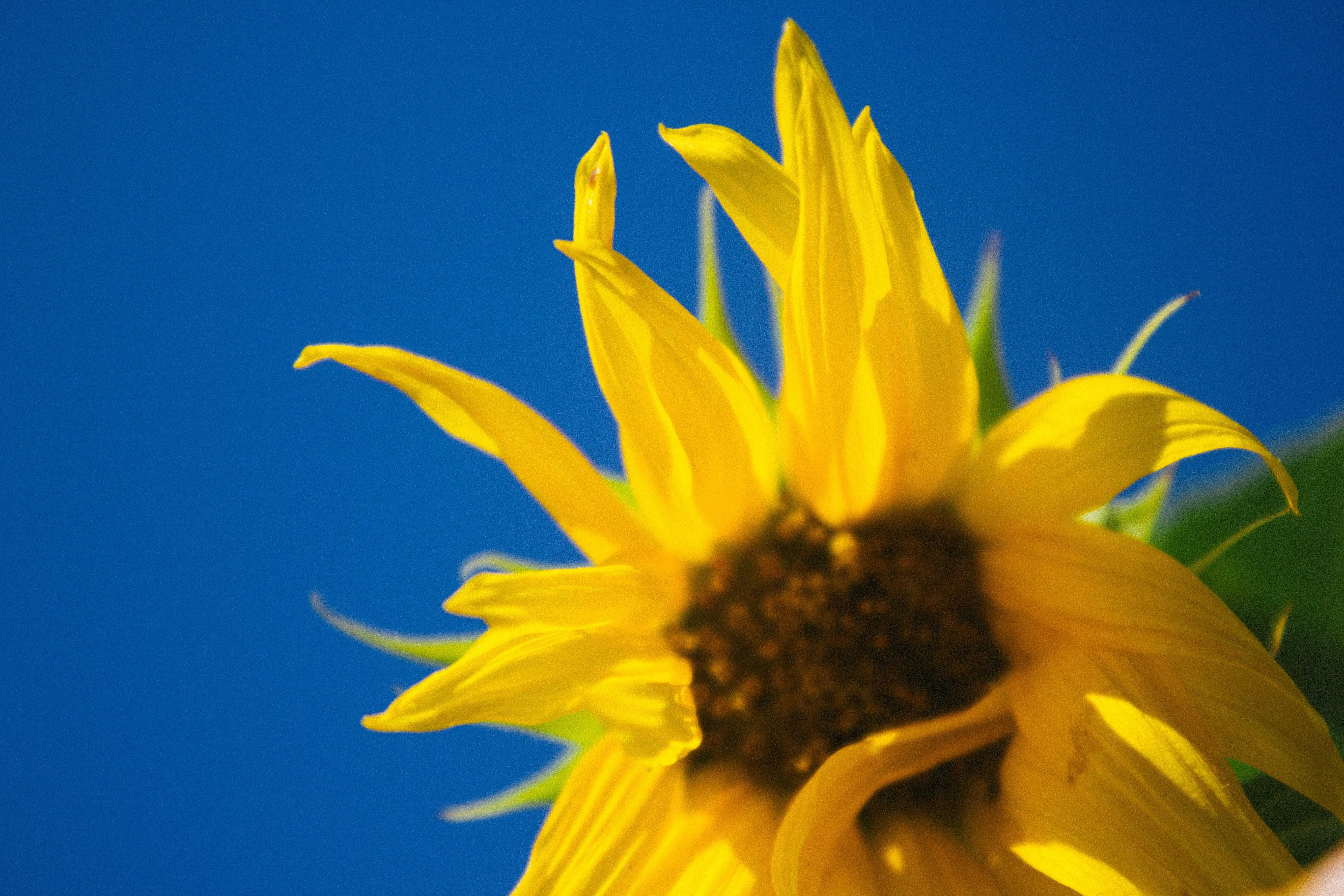 Hình ảnh Thực Vật ánh Sáng Mặt Trời Cánh Hoa Màu Xanh