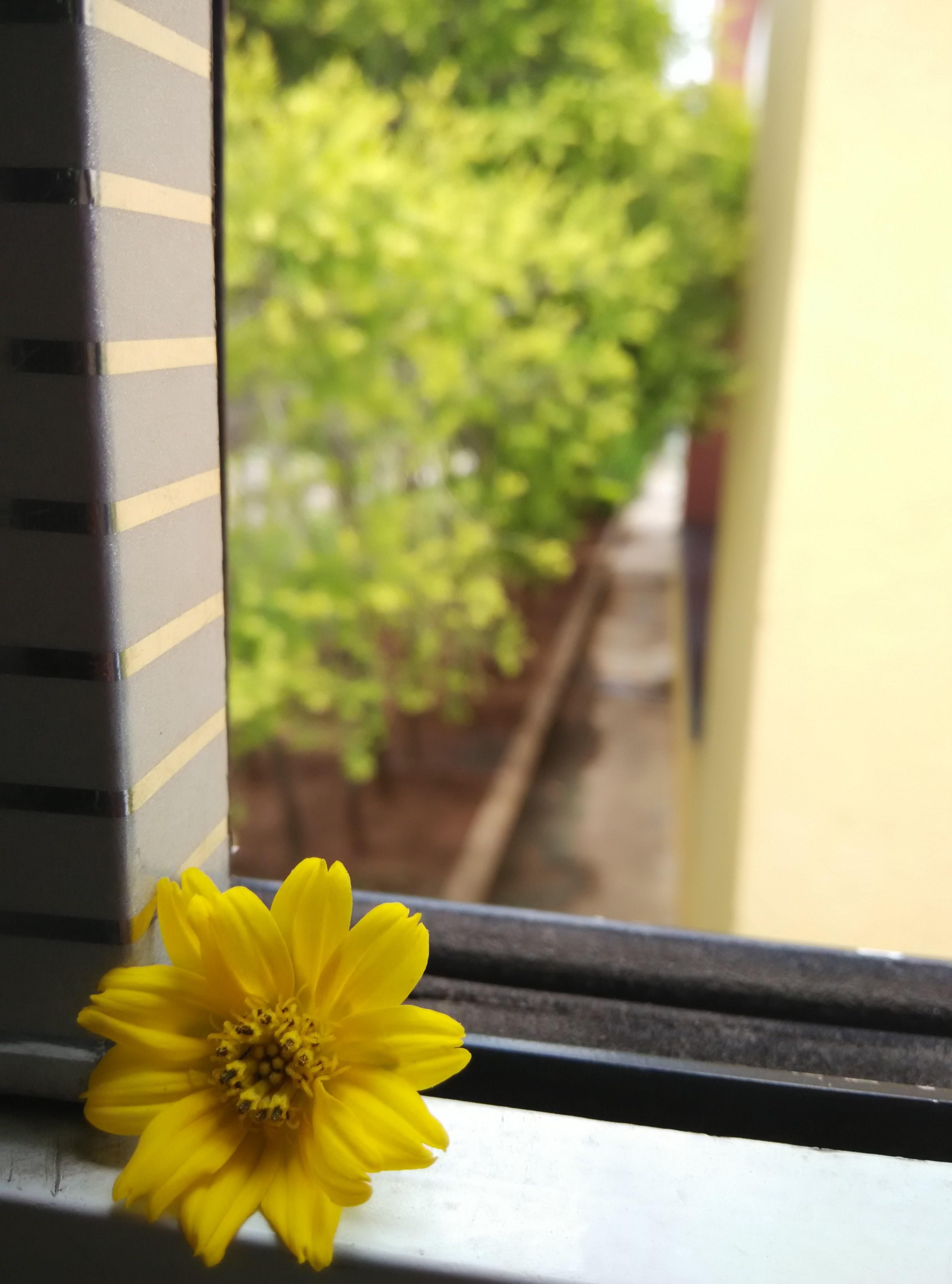 növény napfény levél növényen virág ablak tavaszi zöld szín sárga virágos  növény szárazföldi növény 460aaeff72