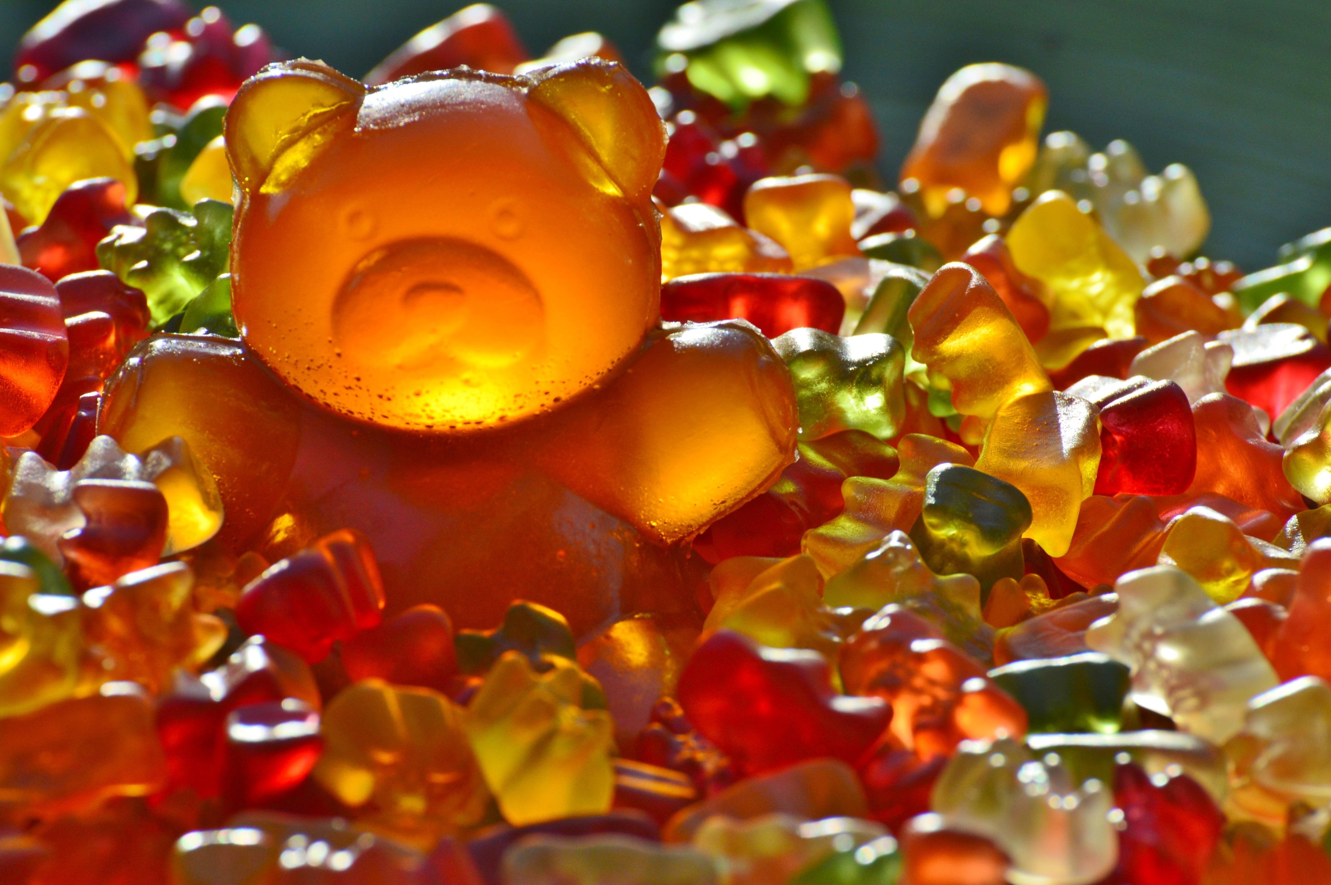 Fotos gratis : planta, dulce, hoja, flor, pétalo, oso, rojo, color ...