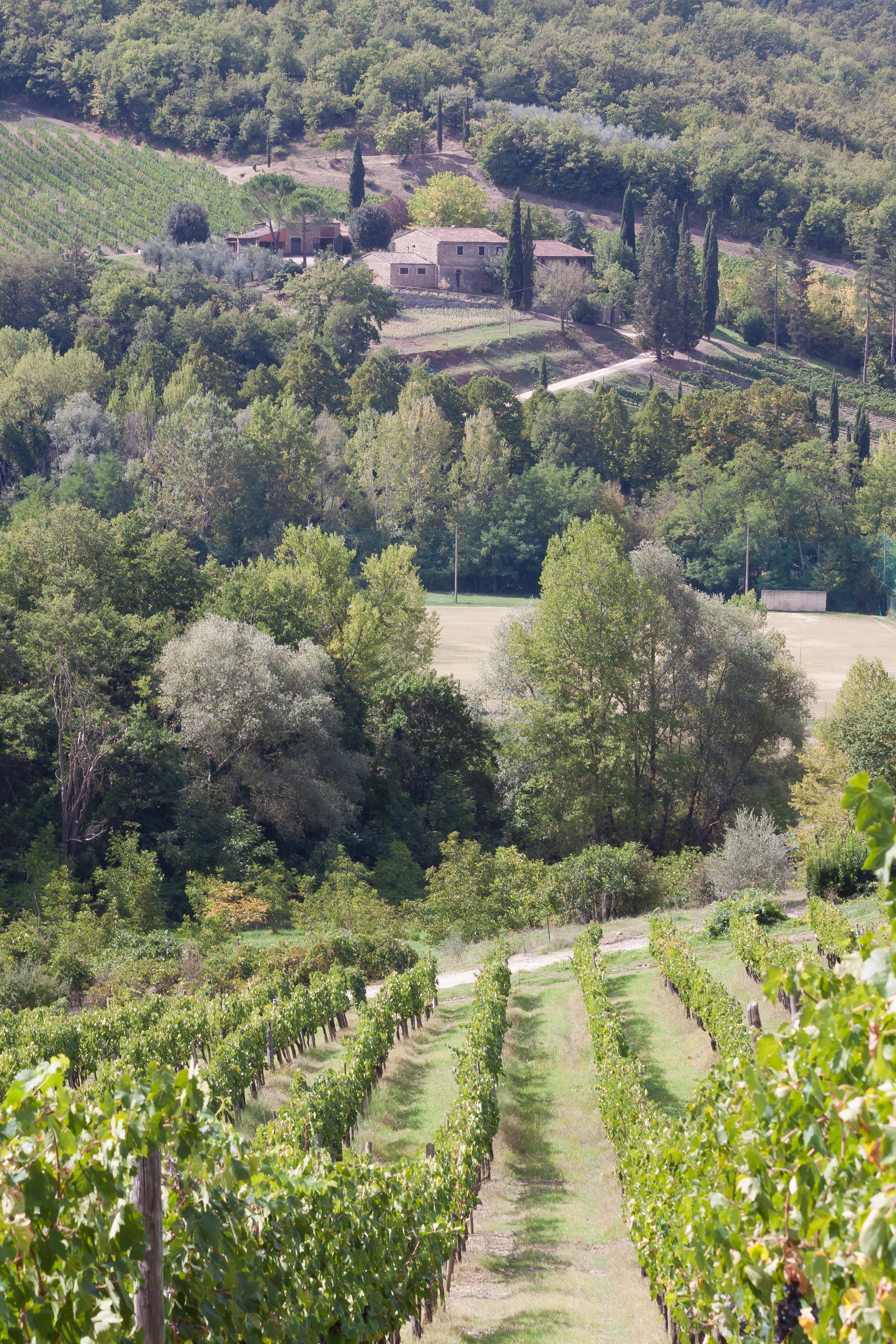 Jardin toscane closeup de jeune vert asperge croissant for Jardin de toscane