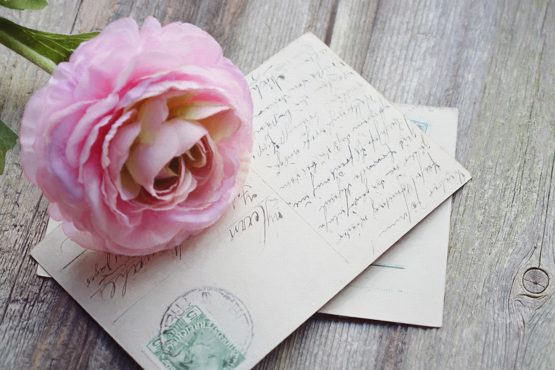 menanam Vintage bunga daun bunga tua mawar keibaan berwarna merah muda kertas dekat peta fon seni
