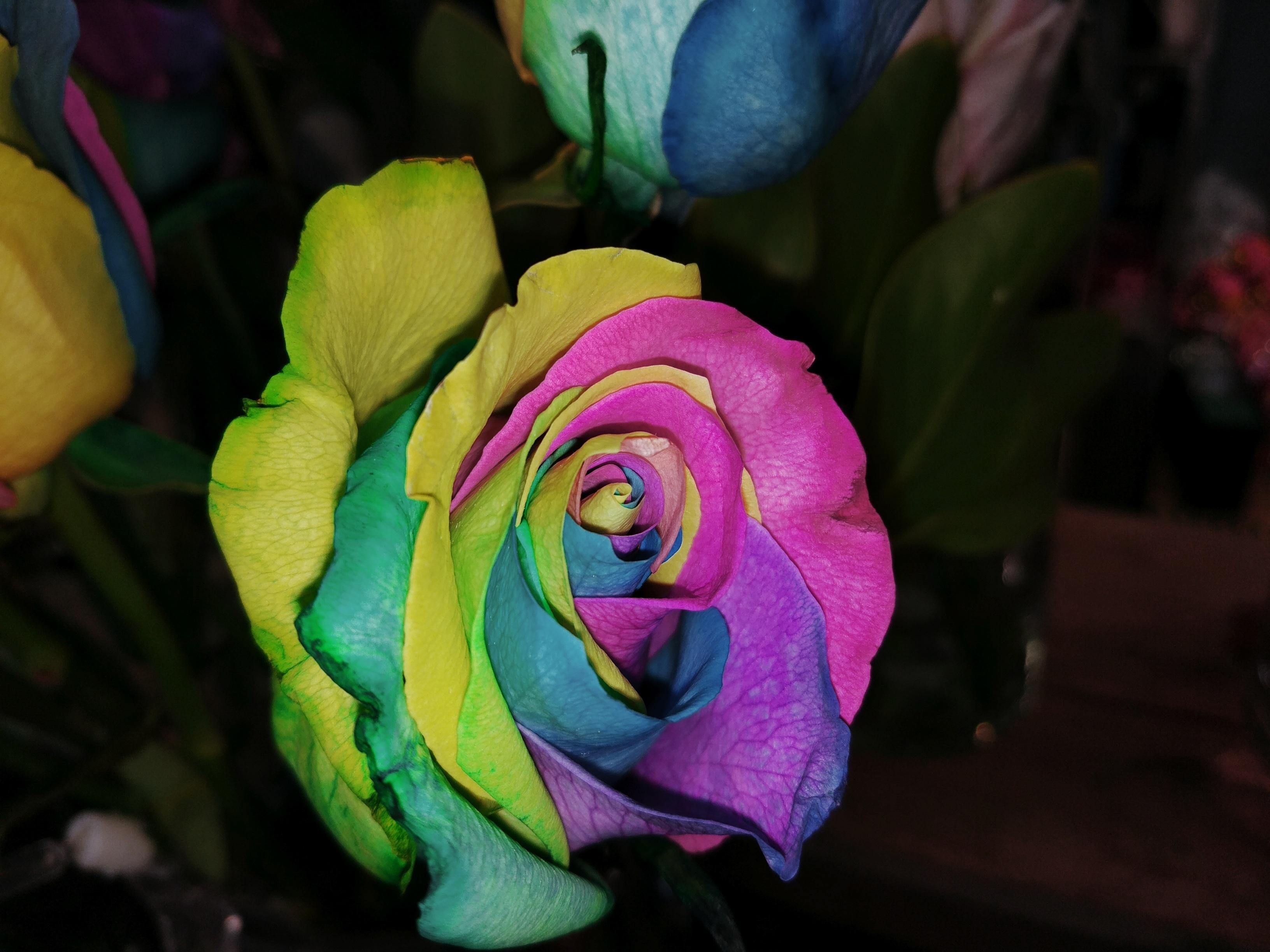 Fotos Gratis Calentar Hoja Flor Petalo Rosa Verde Color