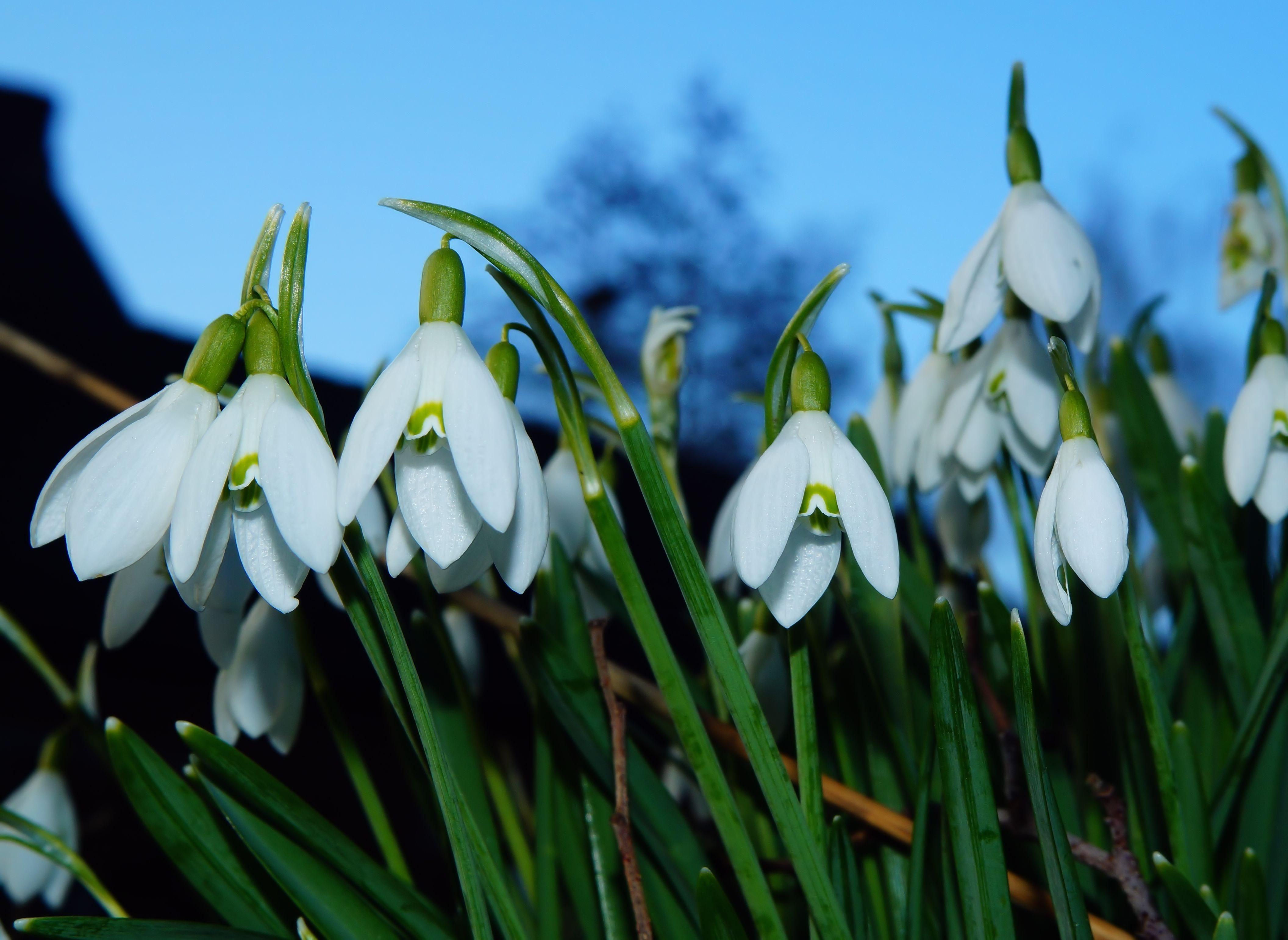 Kostenlose Foto Weiß Blume Blühen Frühling Grün Botanik