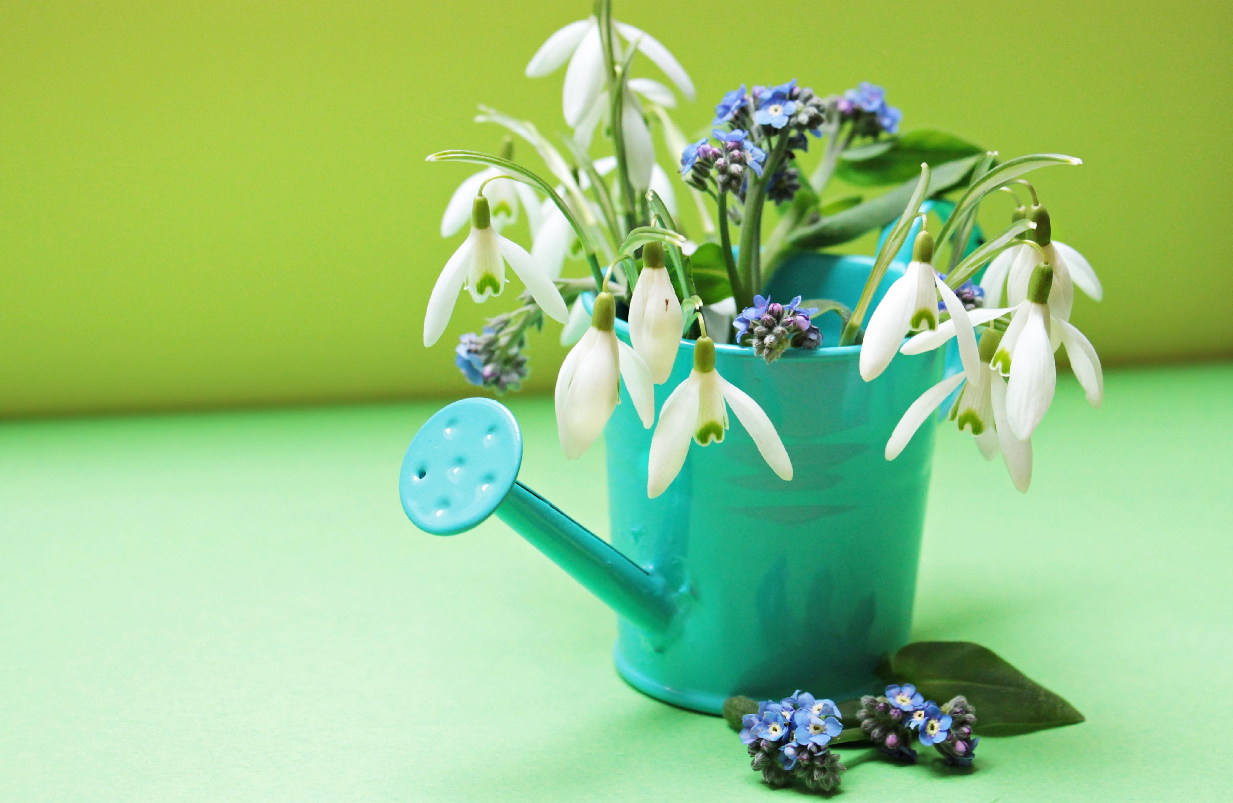 Poze Plantă Alb Floare A Inflori Vază Decor Arc