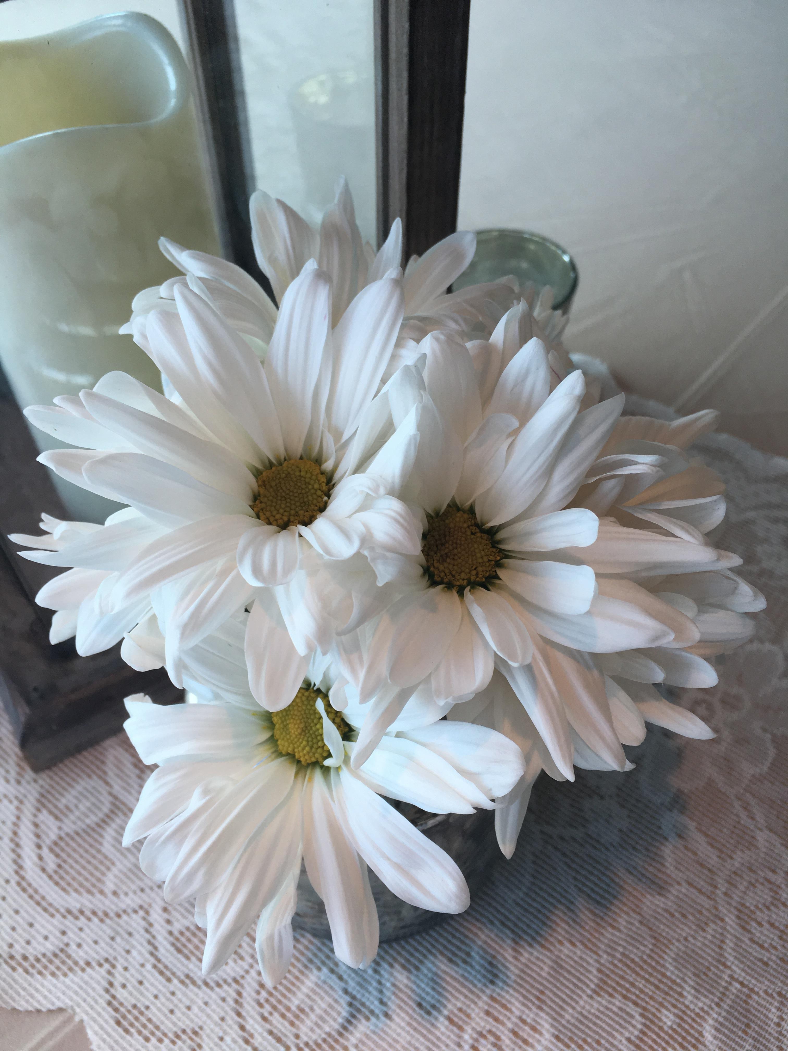 Free Images Petal Arrangement Floristry White Daisy Flowering