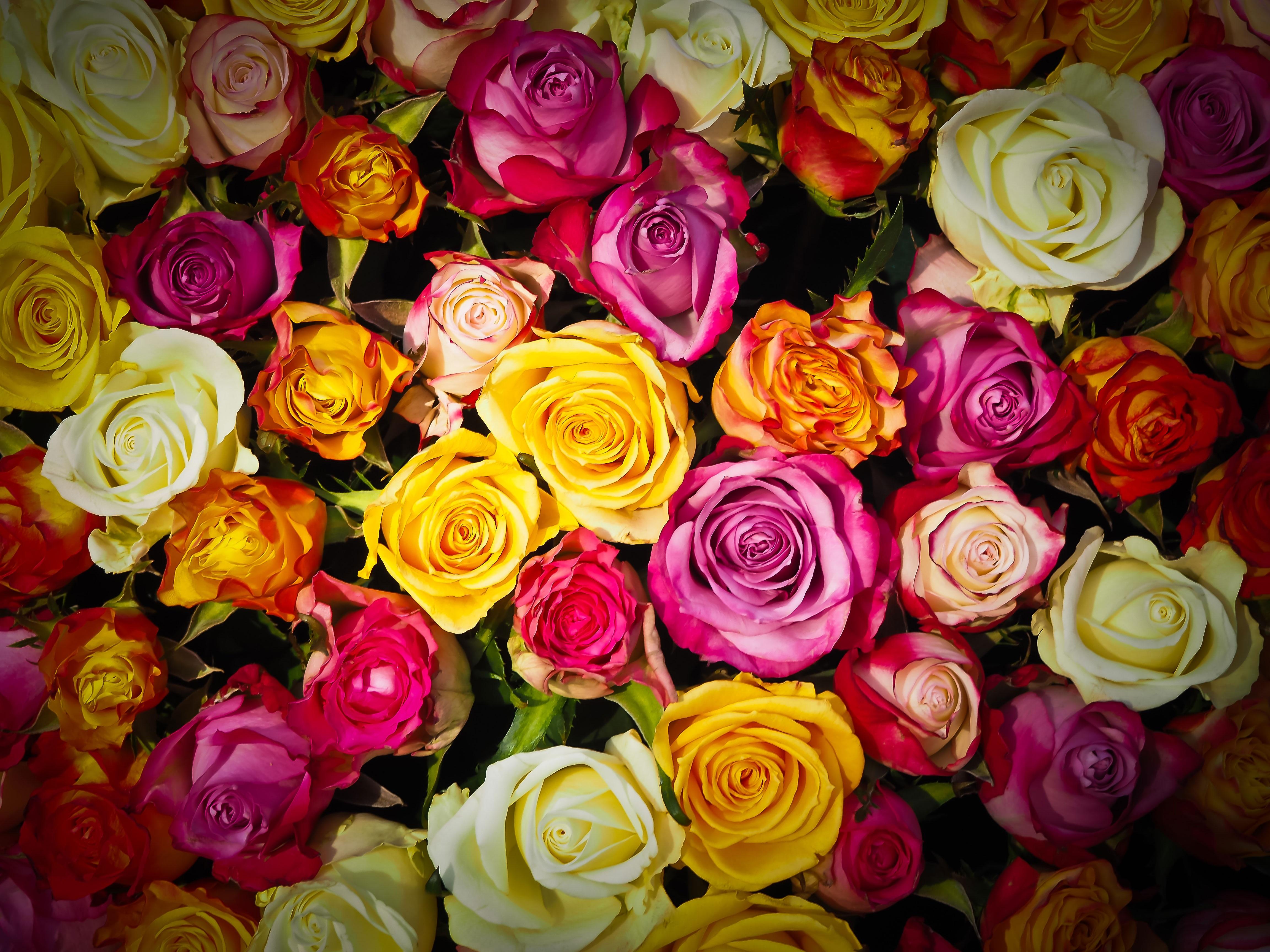 Super Banco de imagens : plantar, branco, flor, pétala, ramalhete  XX51