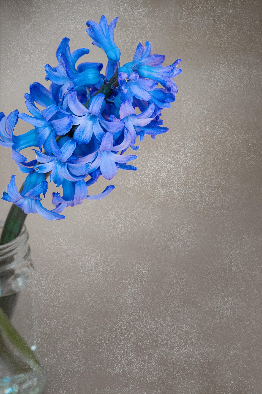 Free Images Plant White Petal Glass Vase Decoration Color