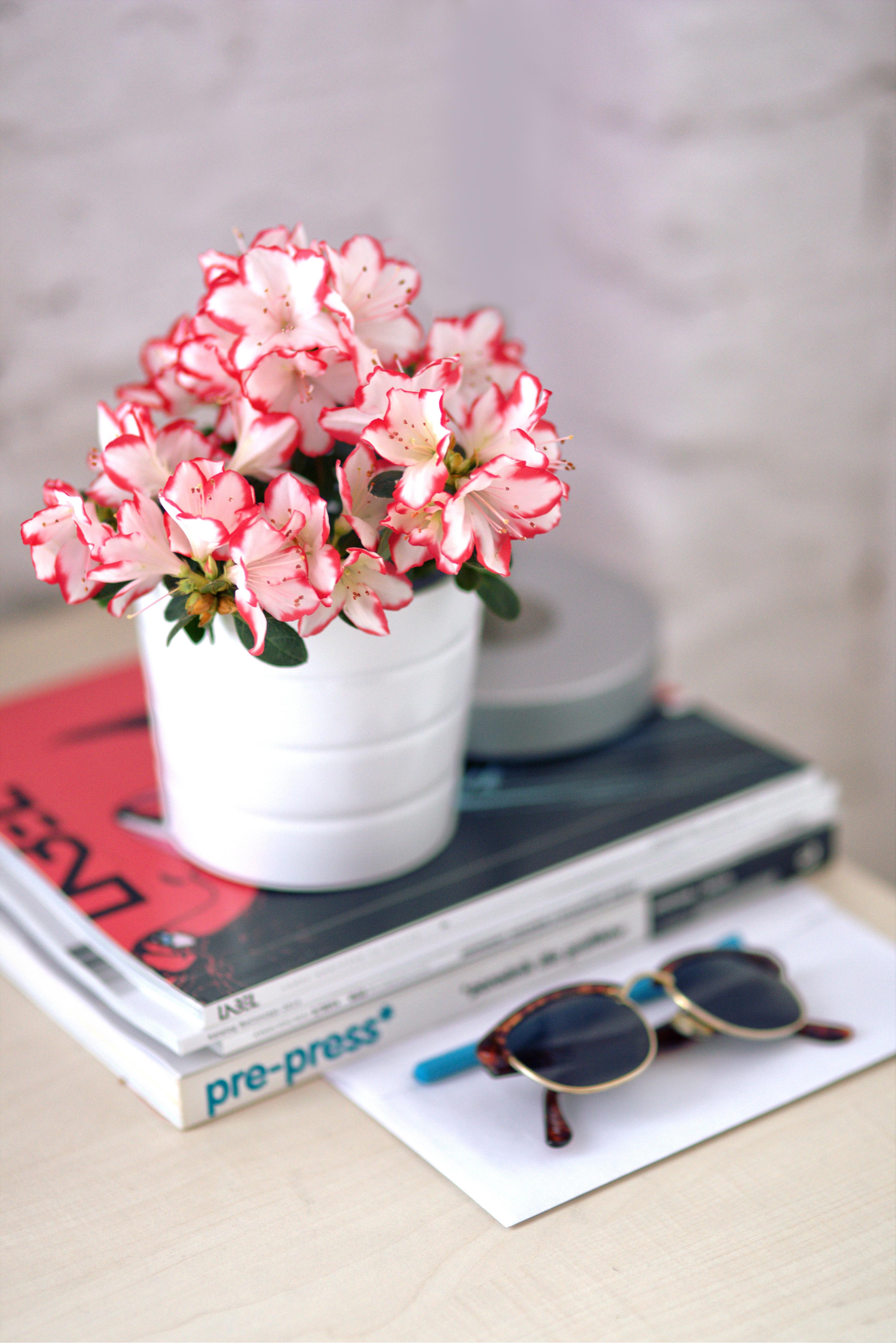 Free Images Plant Flower Petal Interior Spring Pink Art
