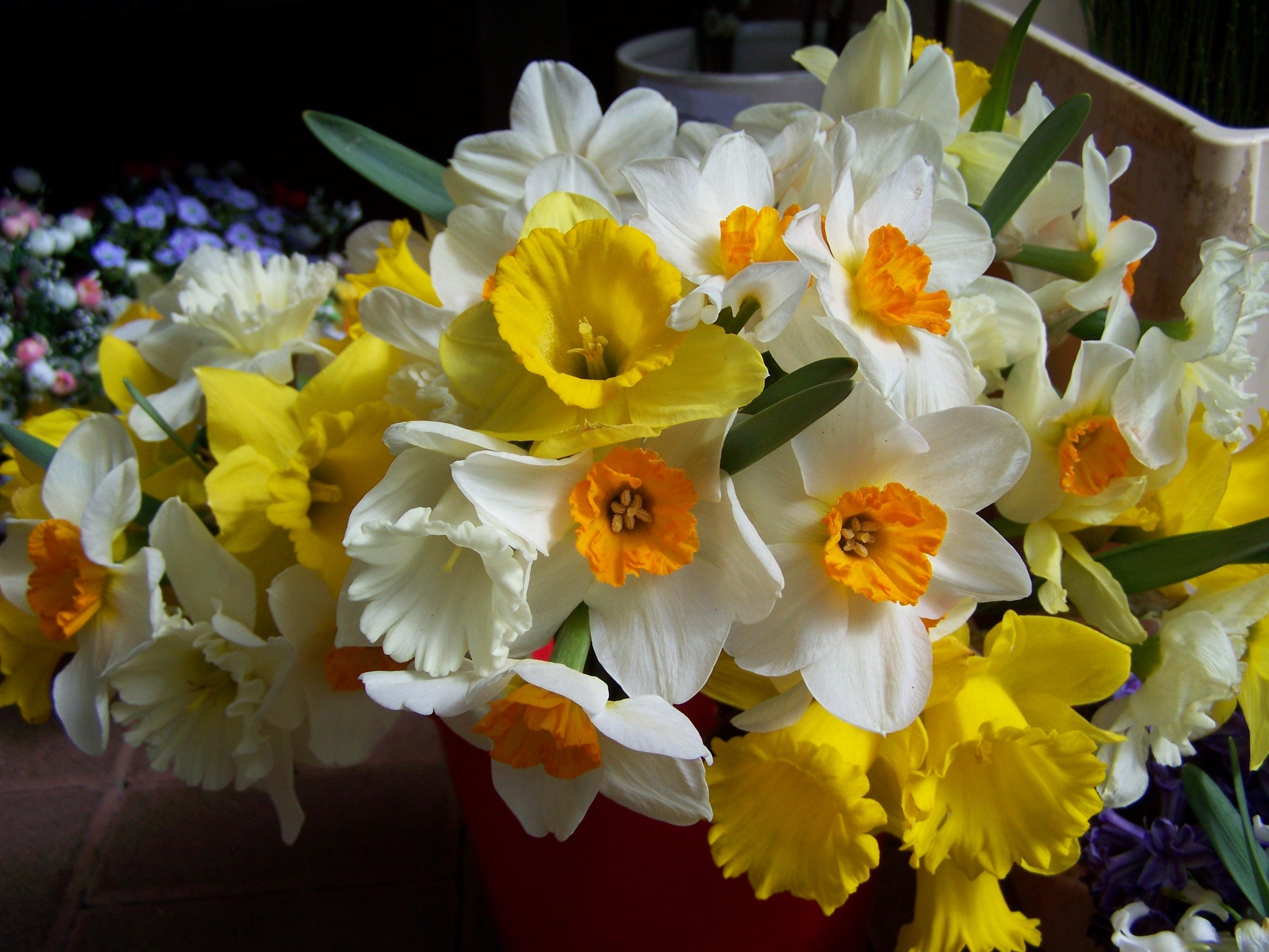 картинки цветы нарциссы букеты каталог, удобная