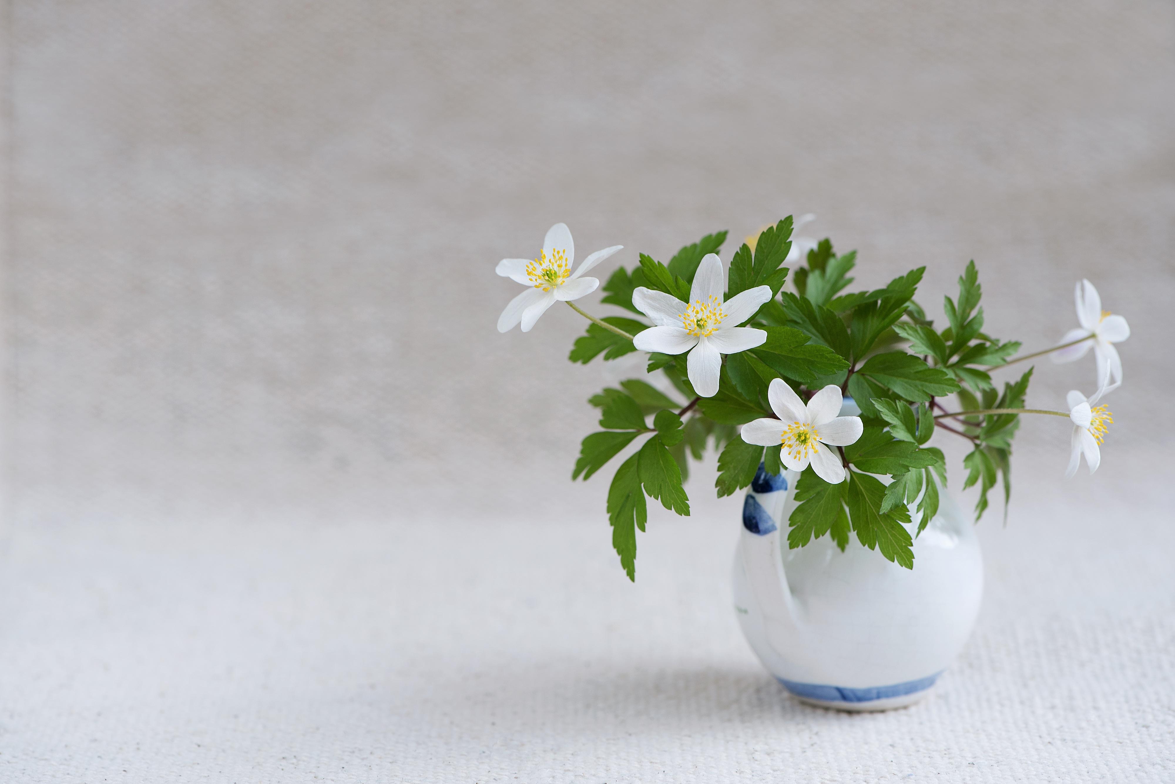 Картинки на рабочий стол цветок в вазе