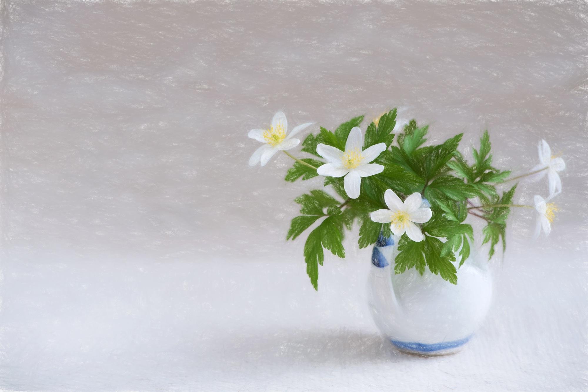 Bildet Anlegg Hvit Petal Vase Tegning Tegne Hvite Blomster Blomstrende Plante Forest