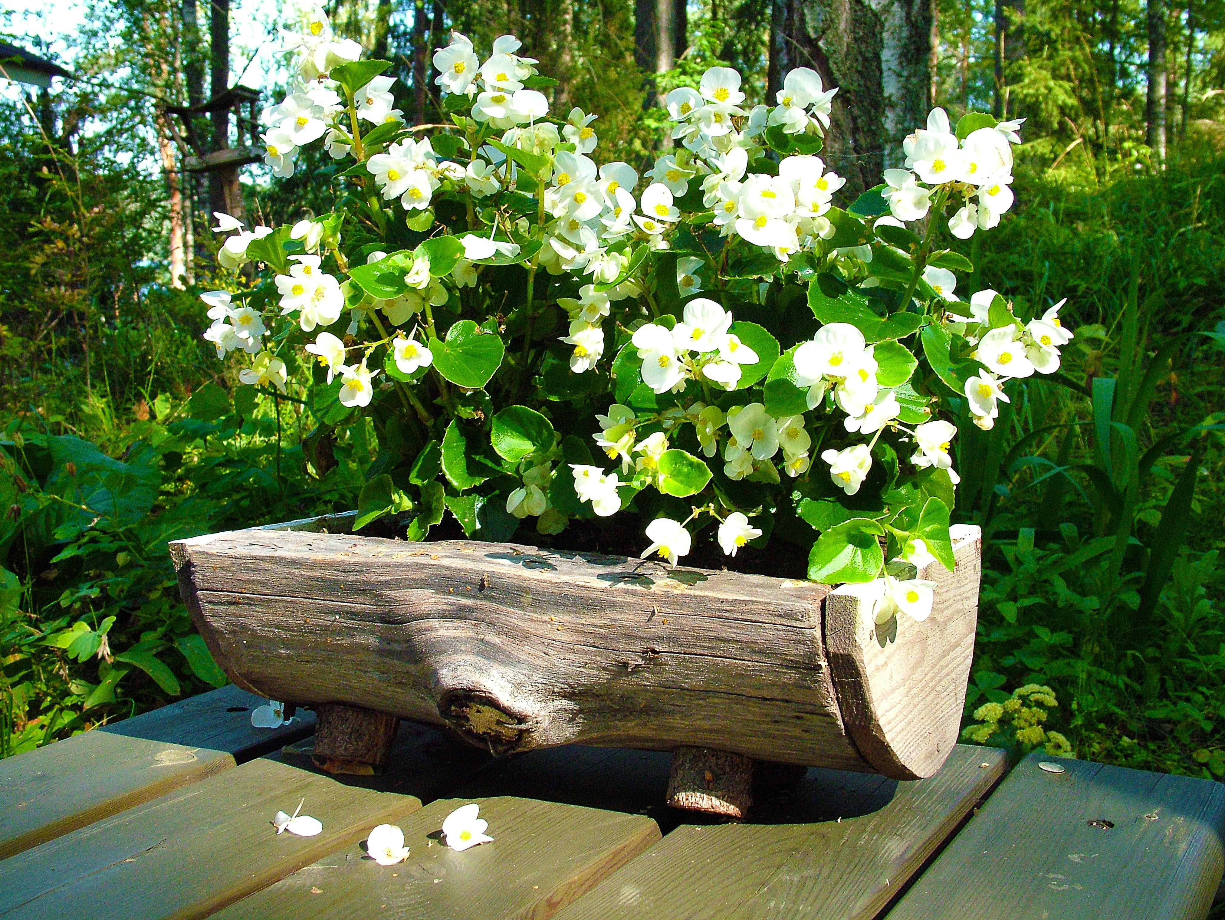 Free Images White Flower Pot Backyard Botany Garden Flora