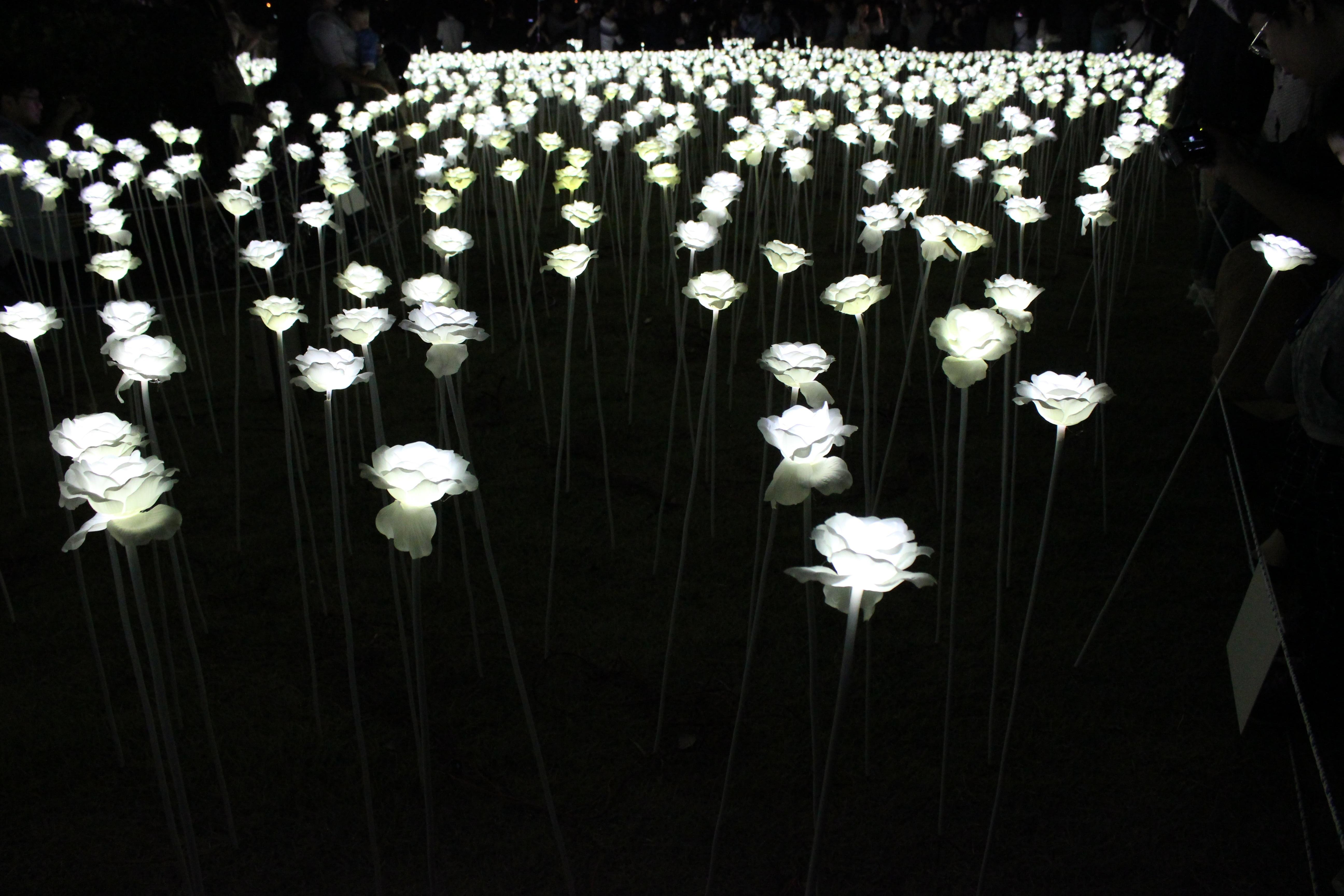 Fotos Gratis Planta Blanco Flor Rosa Oscuridad Flores