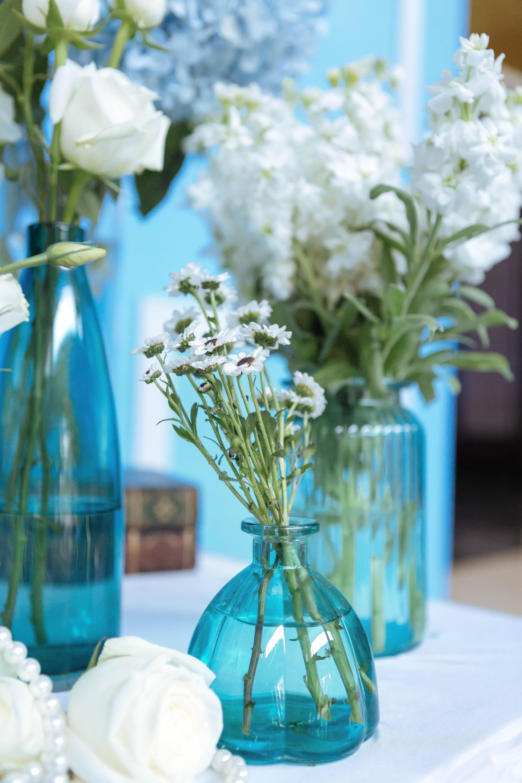 Fotos Gratis Planta Blanco Flor Primavera Verde Azul