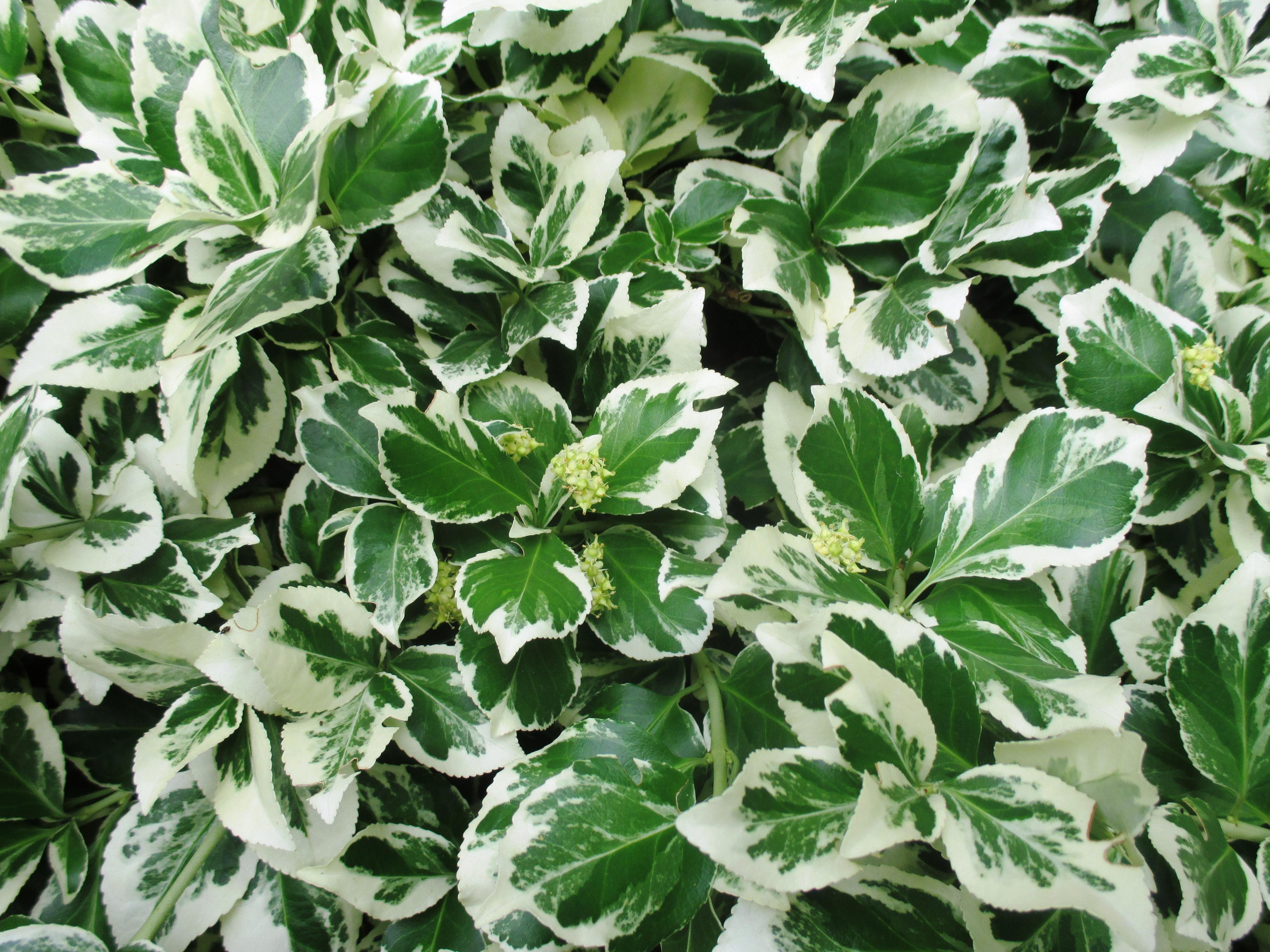 Kostenlose foto Weiß Blatt Blume Busch Grün Kraut