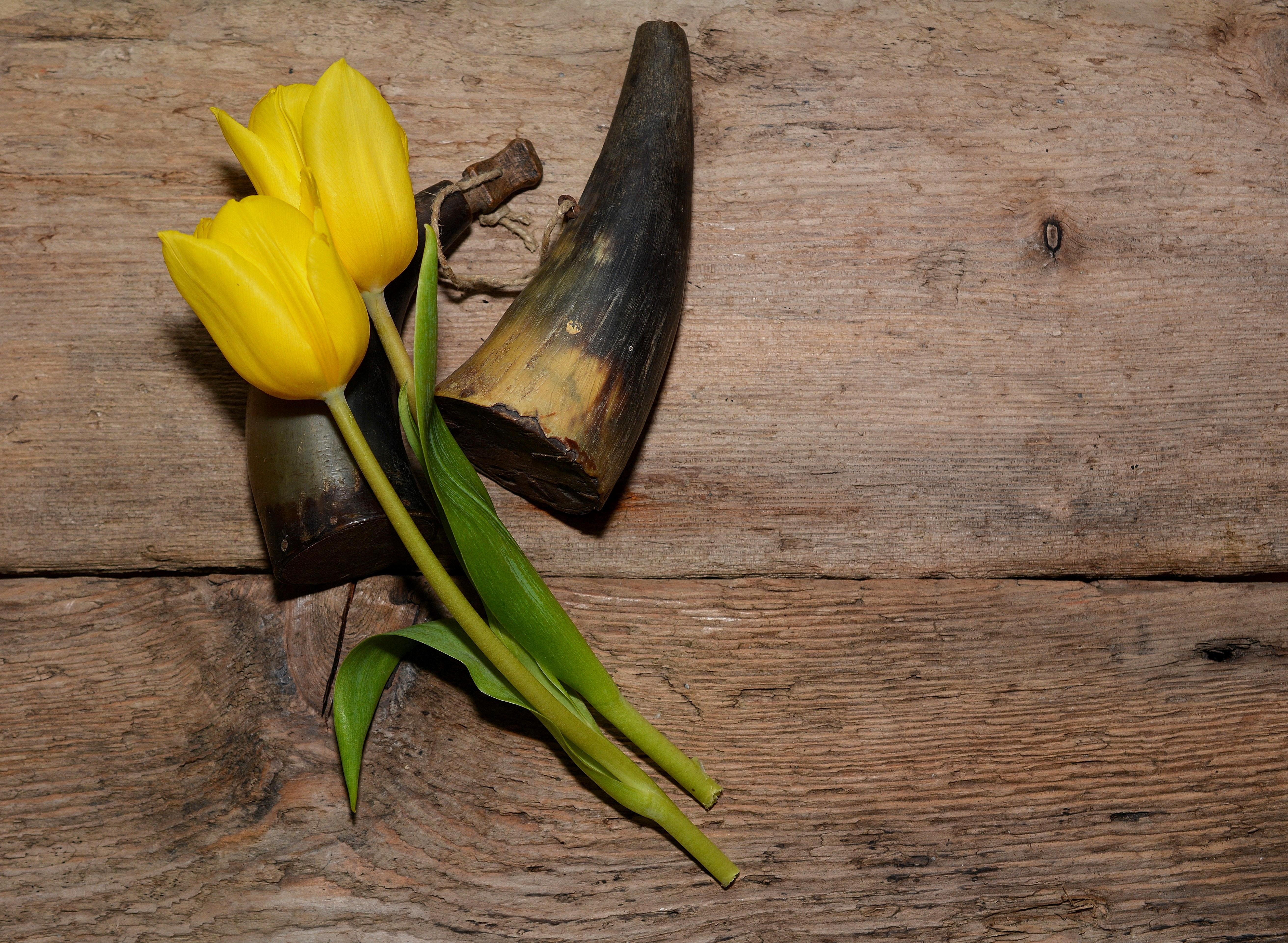 menanam kayu antik daun bunga hijau menghasilkan serangga botani kuning Flora bunga bunga merapatkan tulip