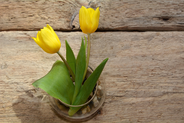 free images wood flower tulip vase botany flora tulips
